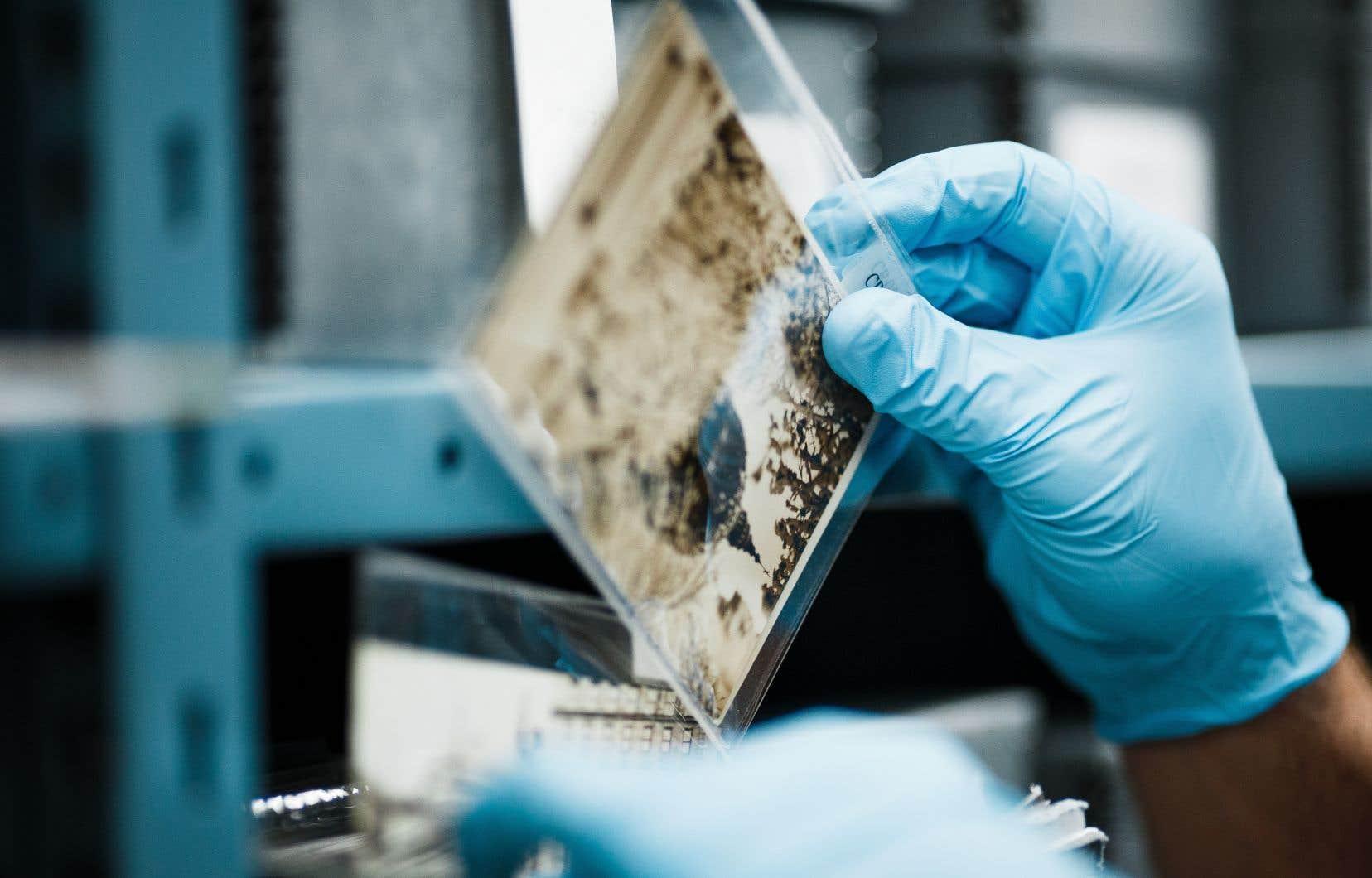 Tous les centres d'archives consultés par<i>«</i>Le Devoir» profitent de la pandémie pour prendre un énergique tournant numérique.