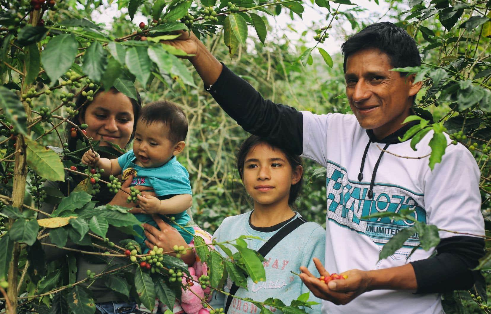 Une famille productrice de café au Pérou, ayant pu bénéficier de l'accompagnement de SOCODEVI pour améliorer ses opérations et développer la commercialisation de ses produits.