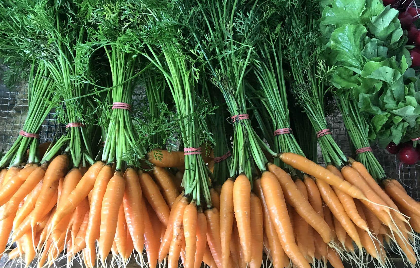 Selon les plus récentes données de Statistique Canada, seulement le tiers des adultes québécois consomment plus de cinq portions de fruits et de légumes par jour.