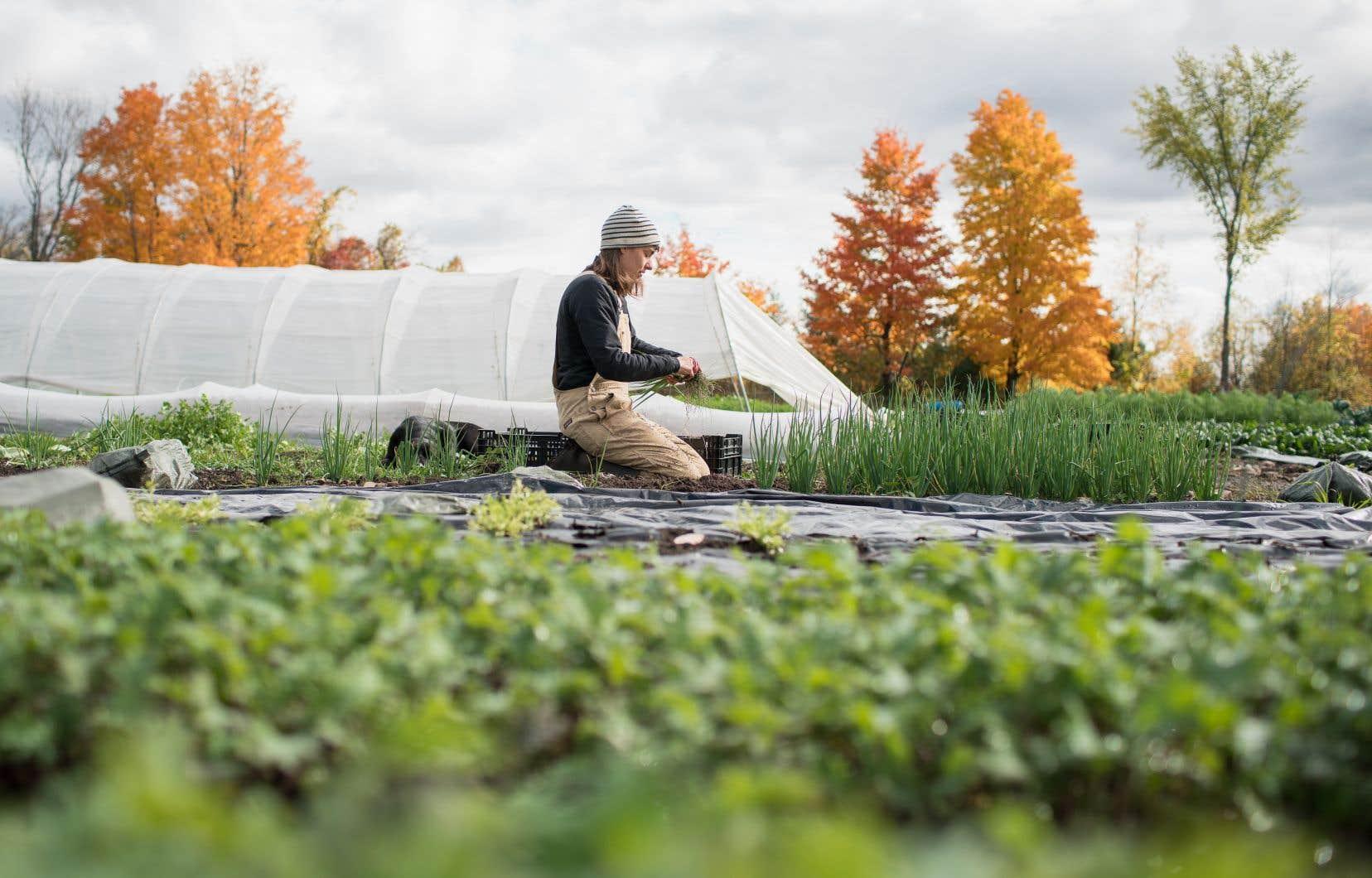 La série «Les fermiers», qui suit le travail de jardiniers-maraîchers, prouve que d'autres modèles d'agriculture sont possibles.
