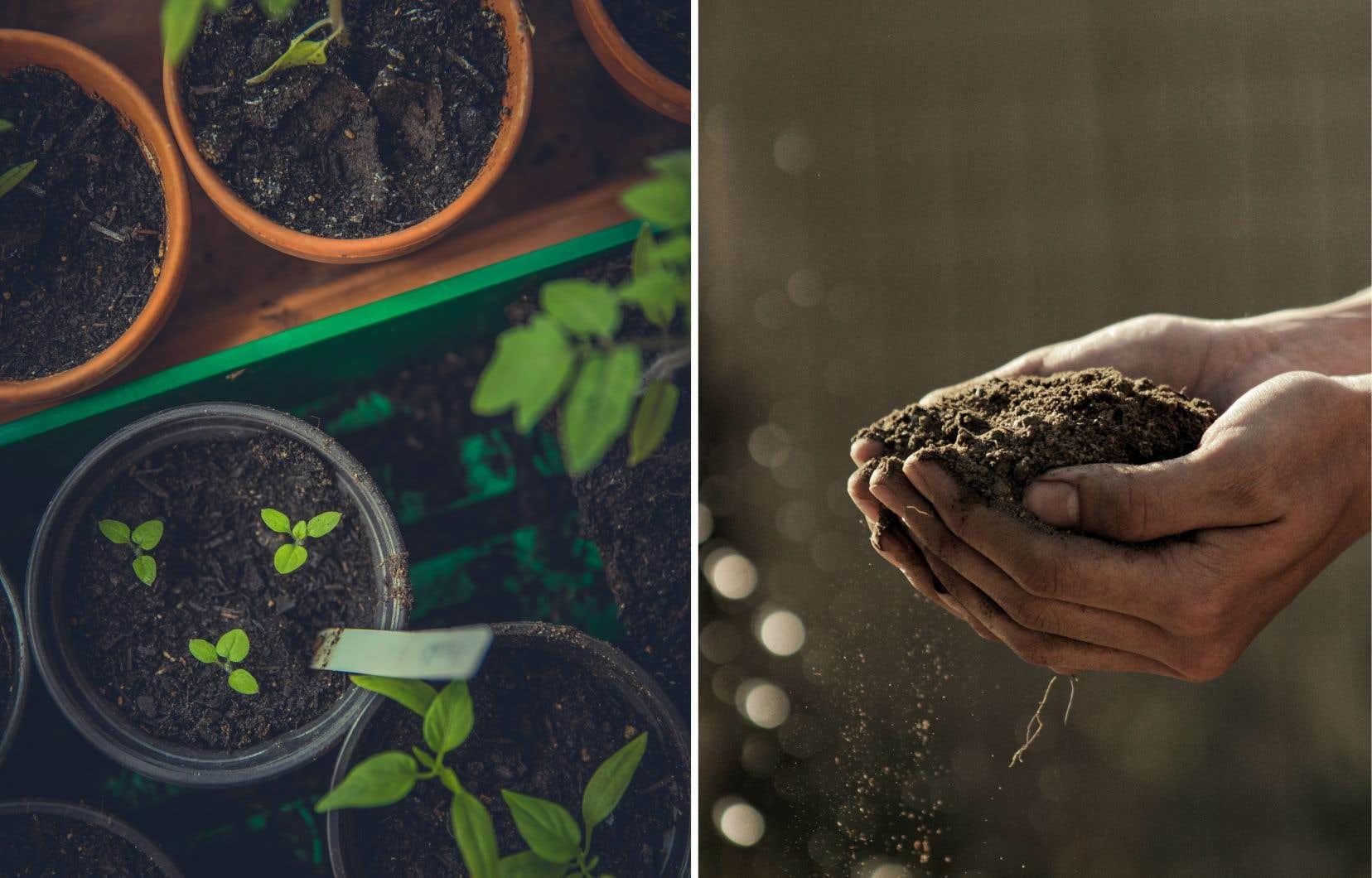 Le meilleur choix — et le seul bon pour les semis — est le terreau à semis ou le terreau à rempotage biologique.