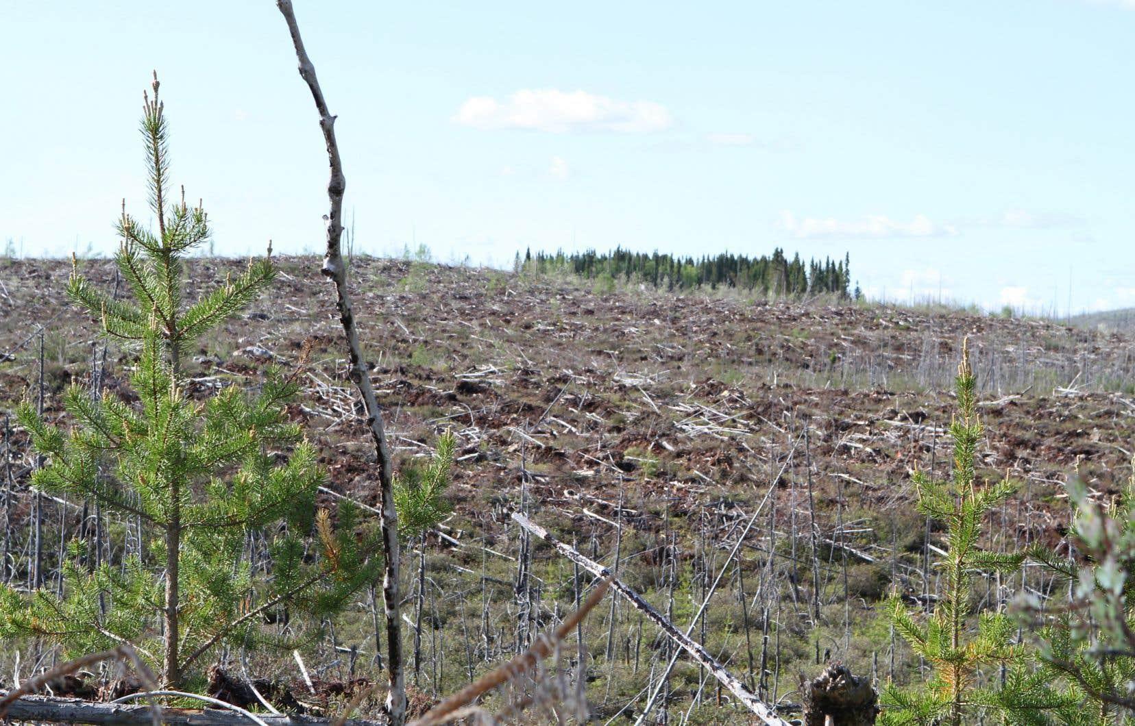 Pour tenter de rétablir la «confiance» du public et d'obtenir un portrait fiable de l'état des forêts du Québec, les auteurs de la lettre réclament la création d'un «observatoire national de la forêt indépendant du gouvernement».