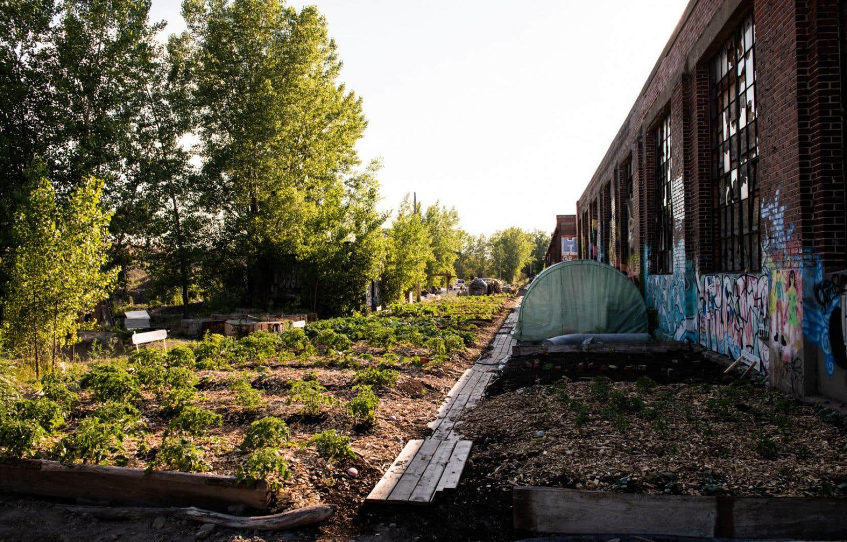 Des jardins aménagés à l'extérieur du Bâtiment 7
