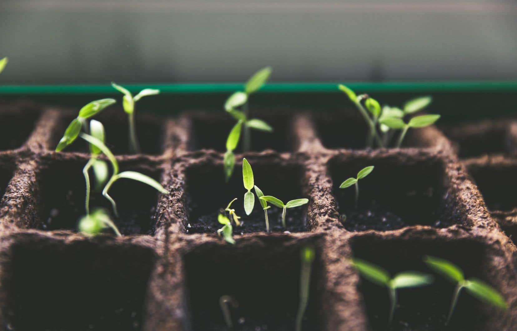 Pour mettre en train vos semis de tomates, vous pouvez utiliser des contenants en multicellules ou des contenants que vous avez déjà à la maison.