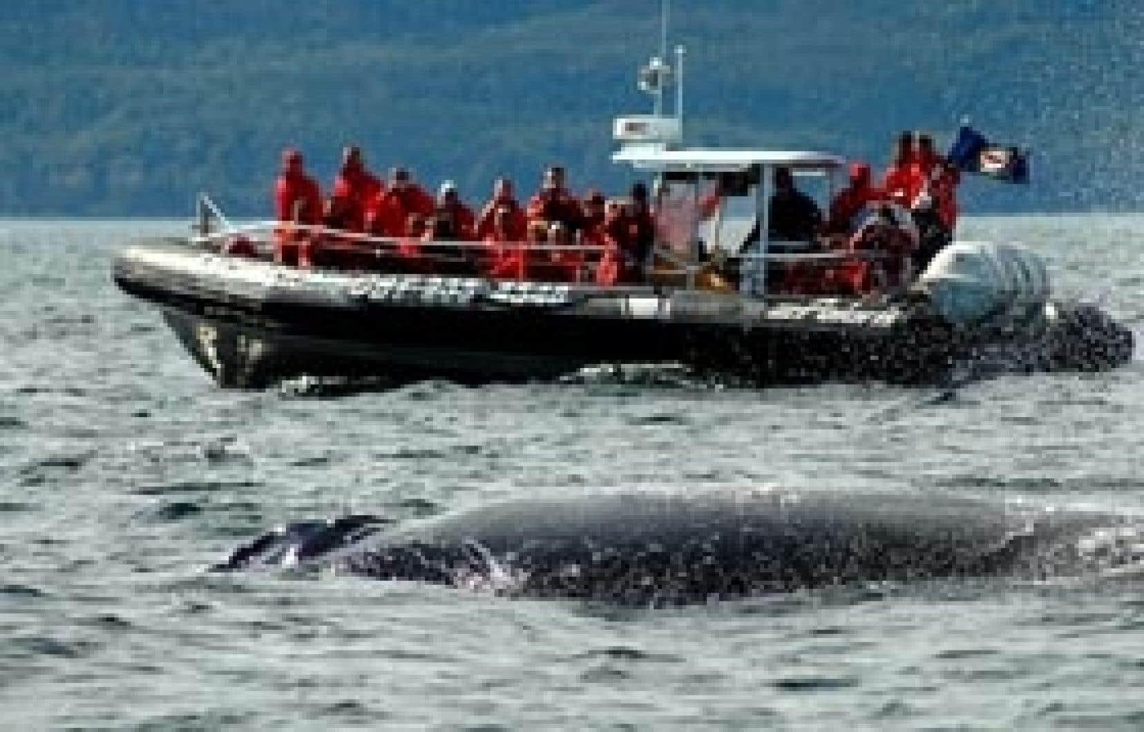 Des plaisanciers prennent part à une excursion organisée par Croisières AML. Sous leurs yeux ébahis, une baleine à bosse glisse lentement à la surface de l'eau.