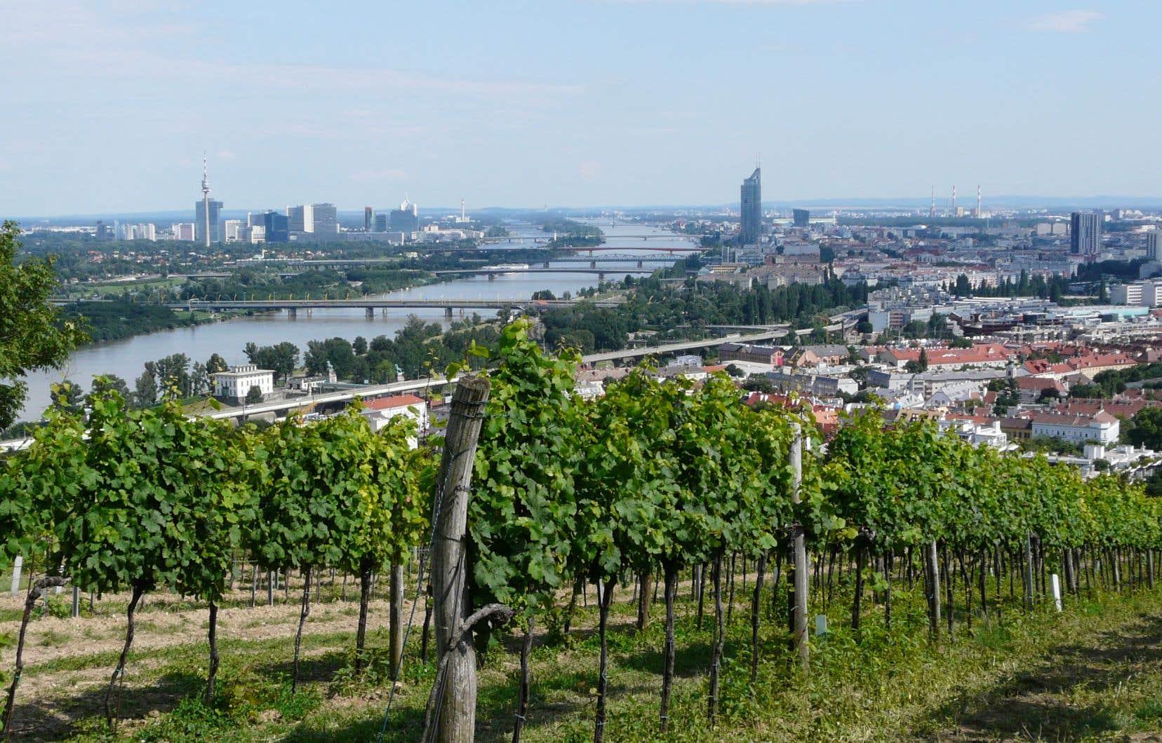 Avec plus de 600 hectares, Vienne est incontestablement la métropole du vin urbain dans le monde.