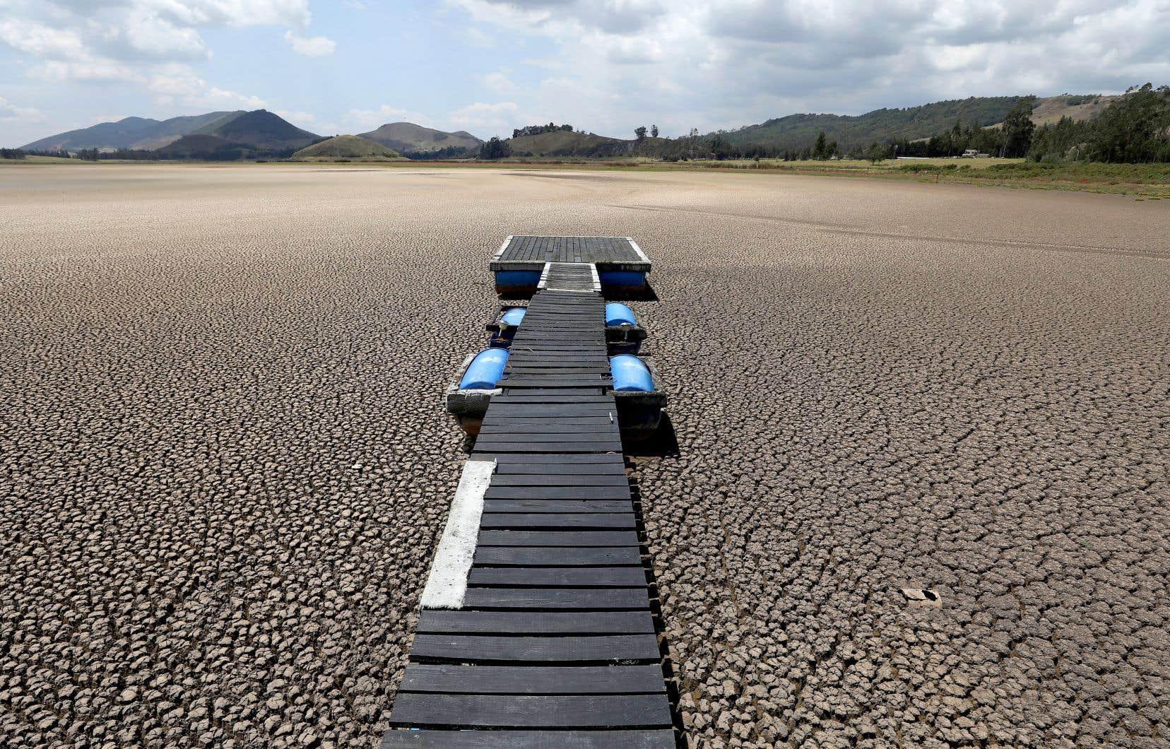 Des vagues de chaleur extrêmes, de graves sécheresses et des incendies de forêt ont entraîné des dizaines de milliards de dollars de pertes et de nombreux décès partout sur la planète.