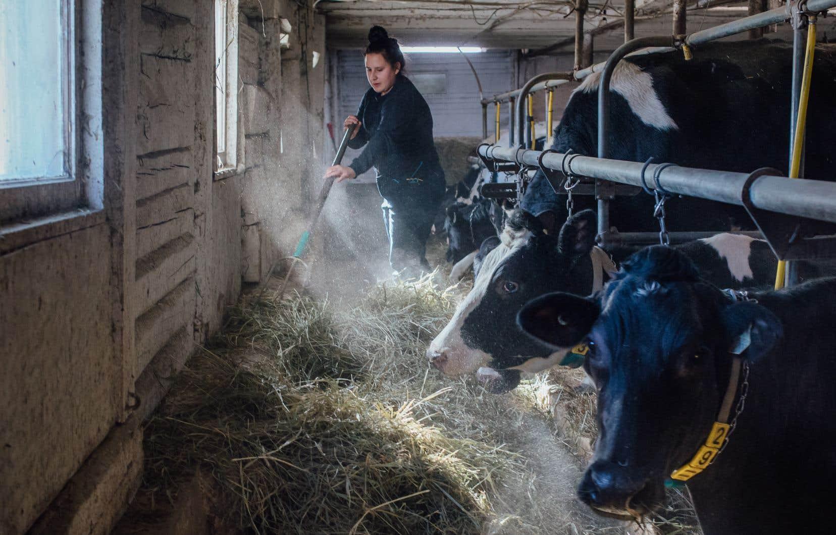 La productivité des fermes laitières québécoises a beaucoup augmenté ces dernières années: chaque vache produit beaucoup plus de lait qu'auparavant, avec une moyenne de 9300 litres par année, selonle ministère de l'Agriculture, des Pêcheries et de l'Alimentation (MAPAQ).