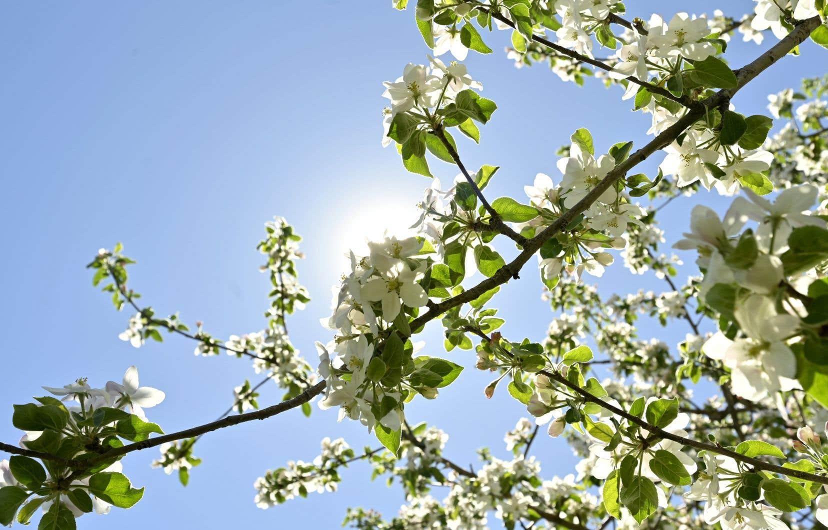 C'est le moment de prévoir une escapade à Rougemont, la capitale de la pomme du Québec, pour profiter de ces paysages éphémères, qui devraient atteindre le sommet de leur beauté autour de la fête des Mères.