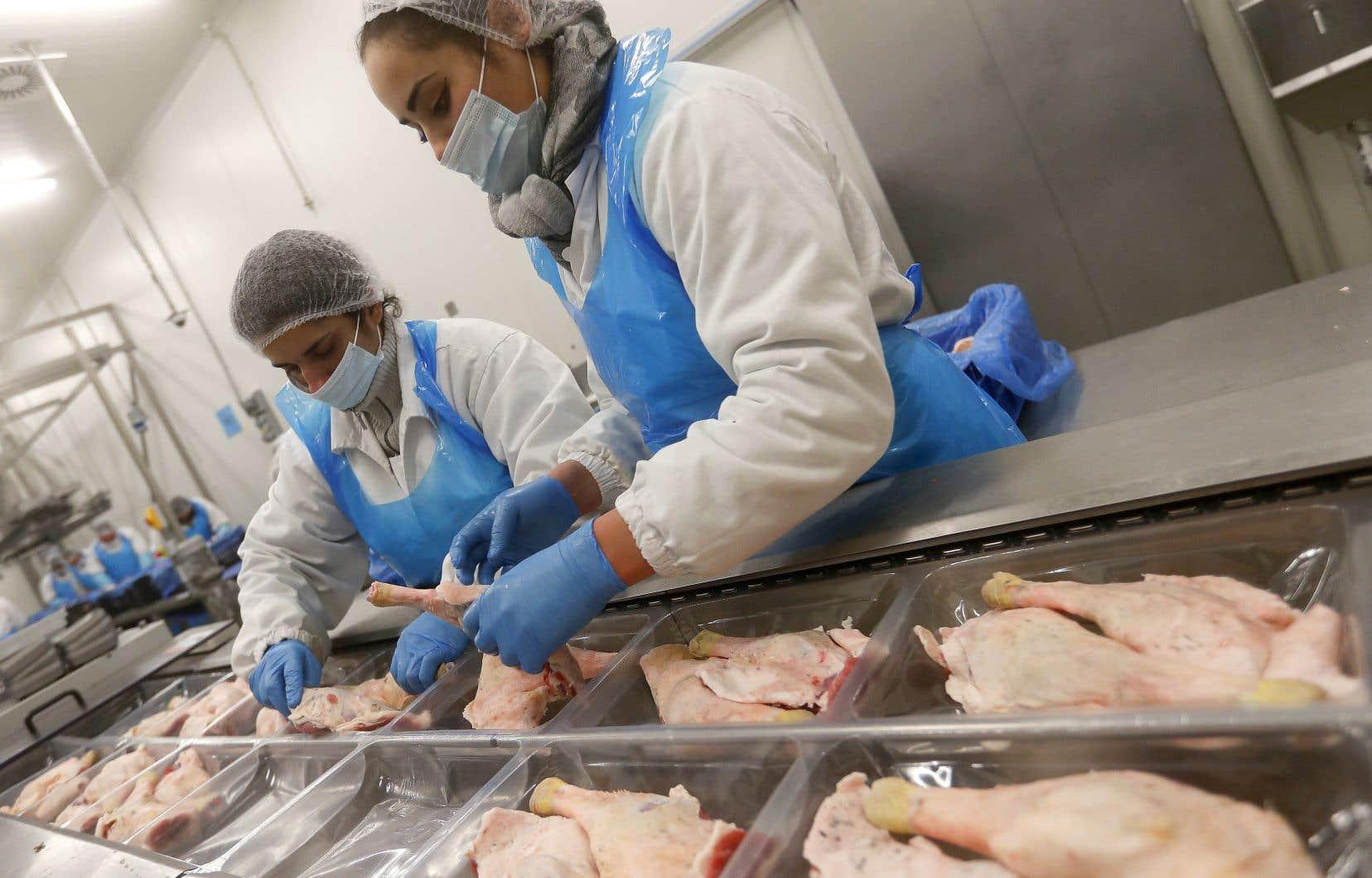L'industrie de l'abattage et de la transformation d'animaux a été terrassée par des éclosions de COVID-19 au début de la pandémie.