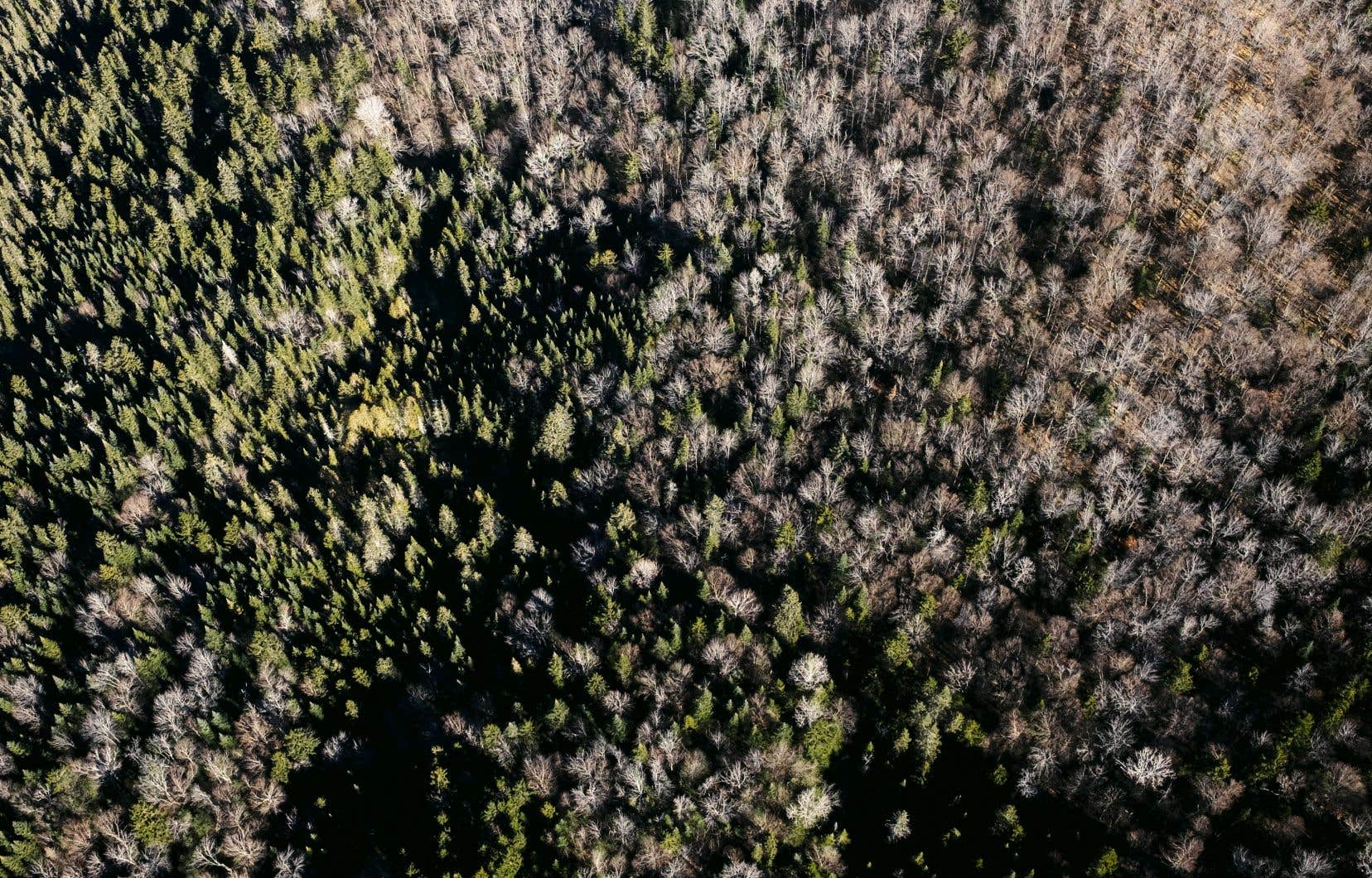 D'ici quelques décennies, le climat du Québec va considérablement se réchauffer. Des conditions typiques de la Nouvelle-Angleterre vont prévaloir dans ce qui est aujourd'hui la forêt boréale.