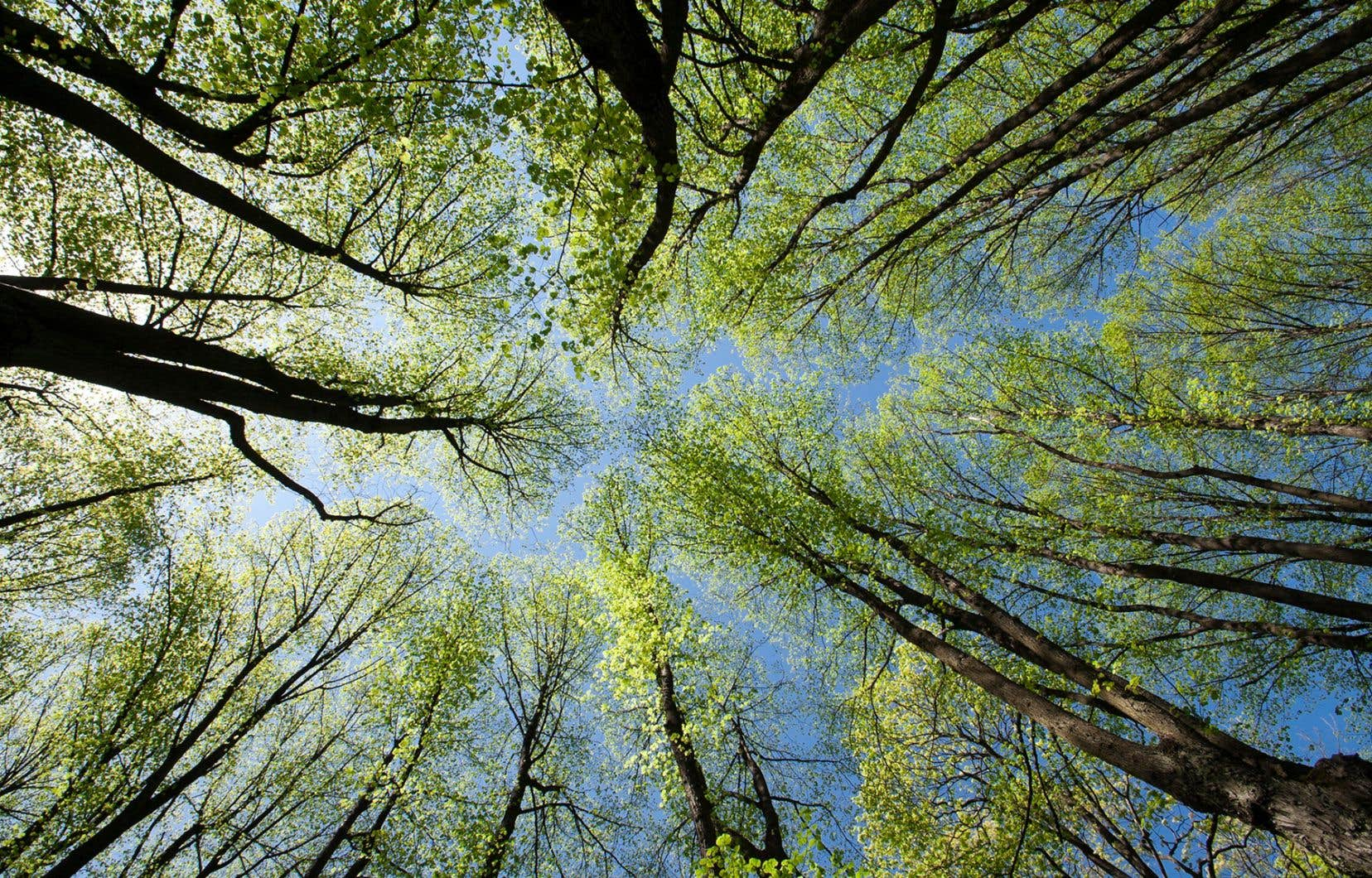Avec son exposition  En compagnie des arbres,  le Jardin botanique invite  les promeneurs à se questionner sur la place des arbres dans la nature.