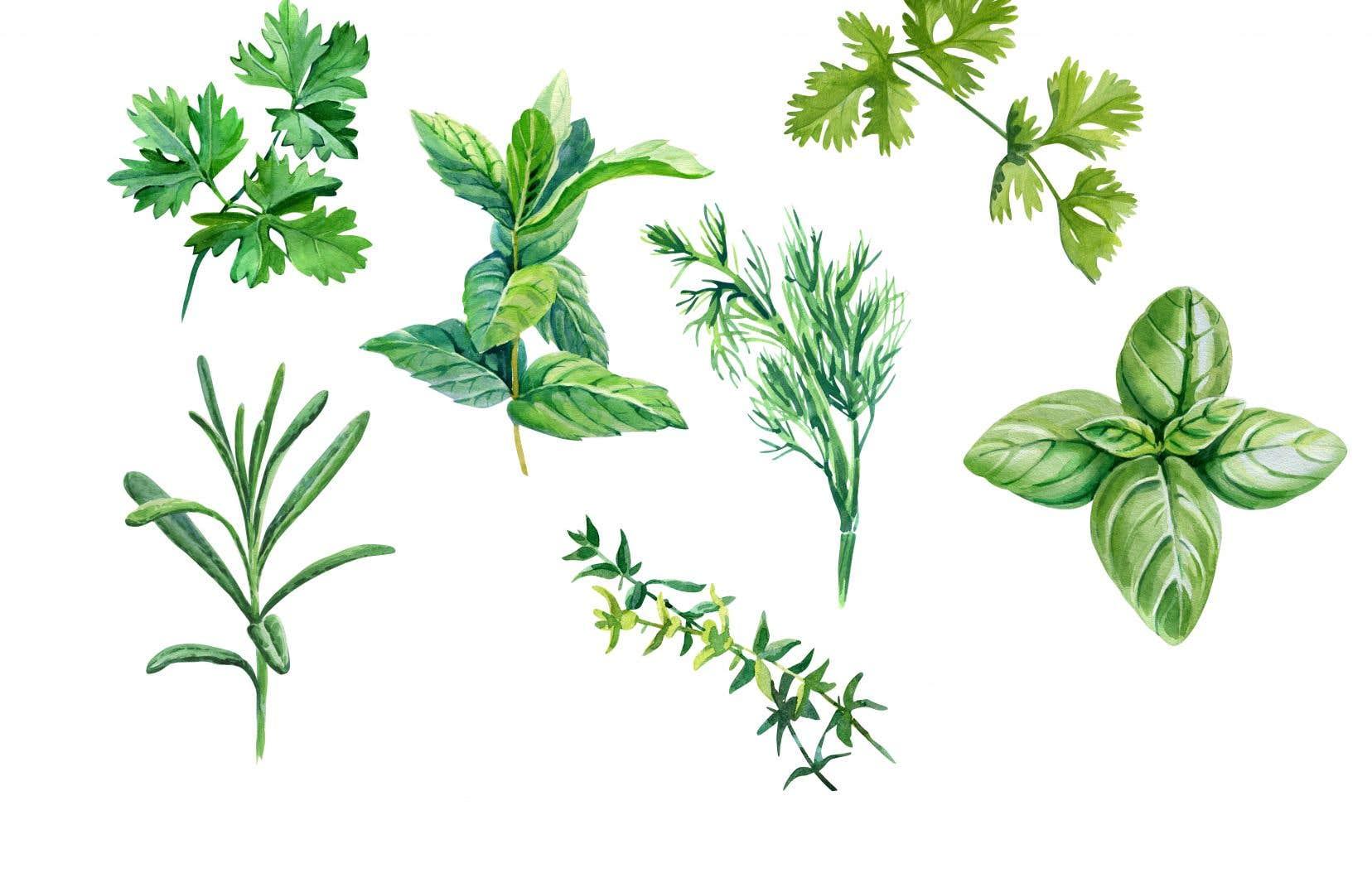 Toutes les fines herbes peuvent être appropriées à toutes les zones de rusticité, mais il suffit de choisir le bon type de thym selon sa zone, par exemple.