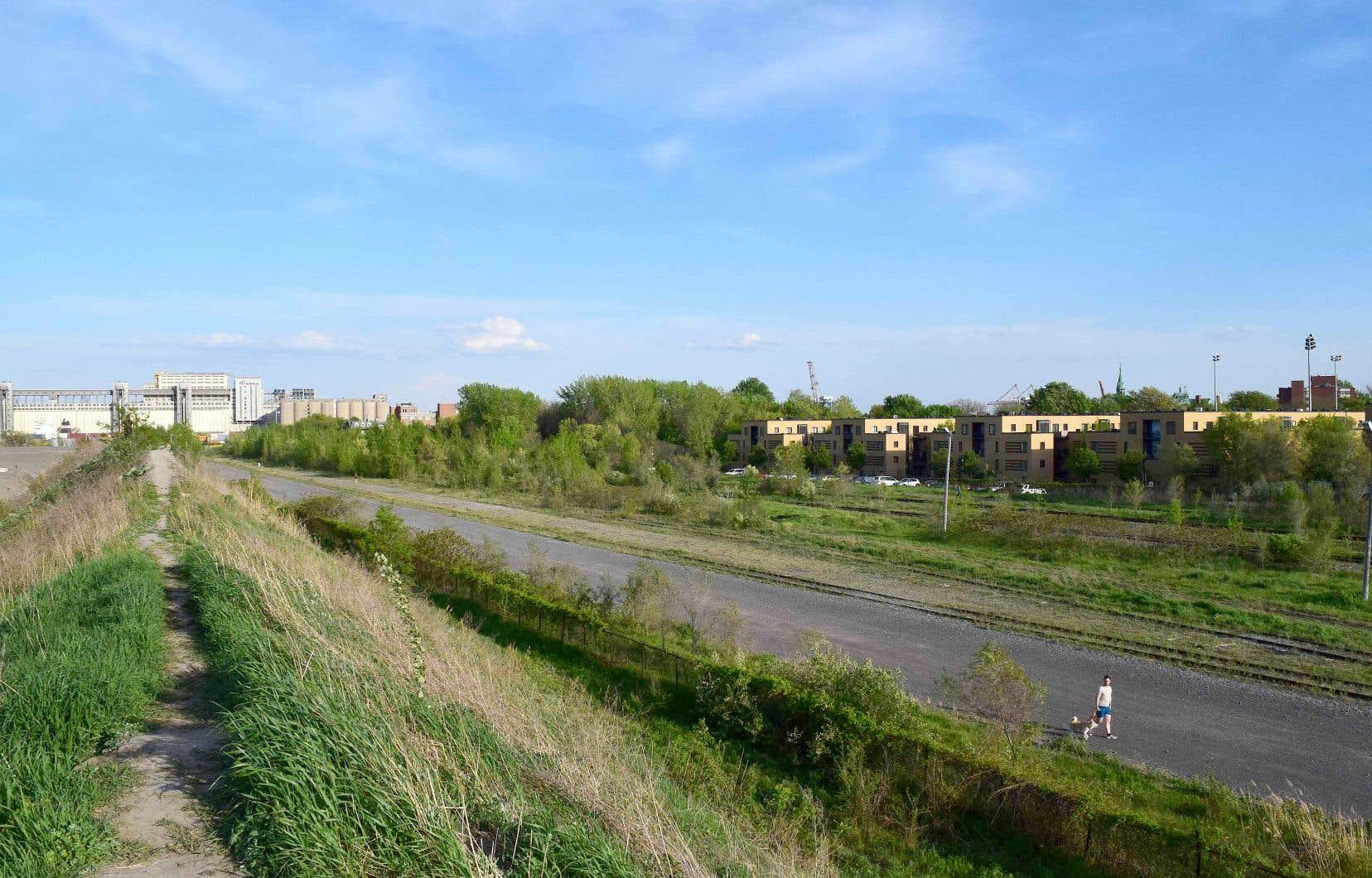 Ray-Mont Logistiques a obtenu l'autorisation de réaliser des opérations de «réhabilitation» du site, qui occupe une superficie d'un peu plus de 232000 mètres carrés, au nord de la rue Notre-Dame, à l'est de la rue Viau. Sur la photo, le «mur écran» (à gauche) construit par le promoteur, du côté d'un secteur résidentiel.