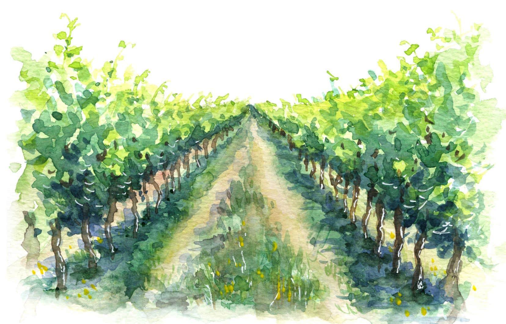 Aujourd'hui, la production vinicole québécoise s'élève à 2,5 millions de bouteilles par année, le tout étant issu de 146 vignobles.