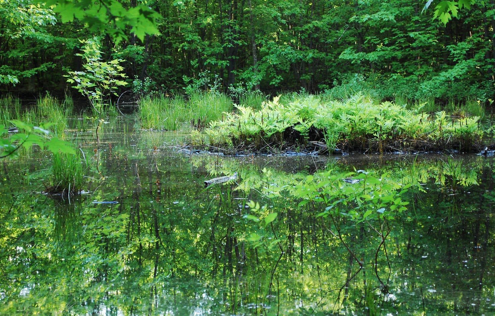 Le bois de l'Équerre, situé dans le quartier Sainte-Rose