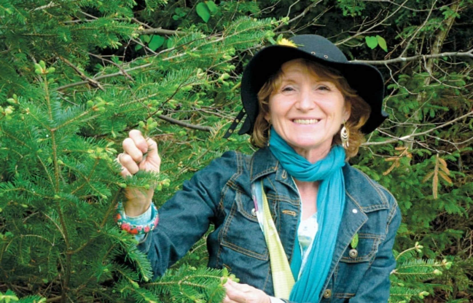 """Pour clore le joli mai, l'herboriste Anny Schneider cueille des bourgeons de sapin baumier destinés à une tisane apéritive. «Autrefois, on disait de quelqu'un qui était très malade qu'il """"sentait le sapin"""" parce qu'on fabriquait les cercueils en sapin», raconte la sage femme aux connaissances druidiques.<br />"""