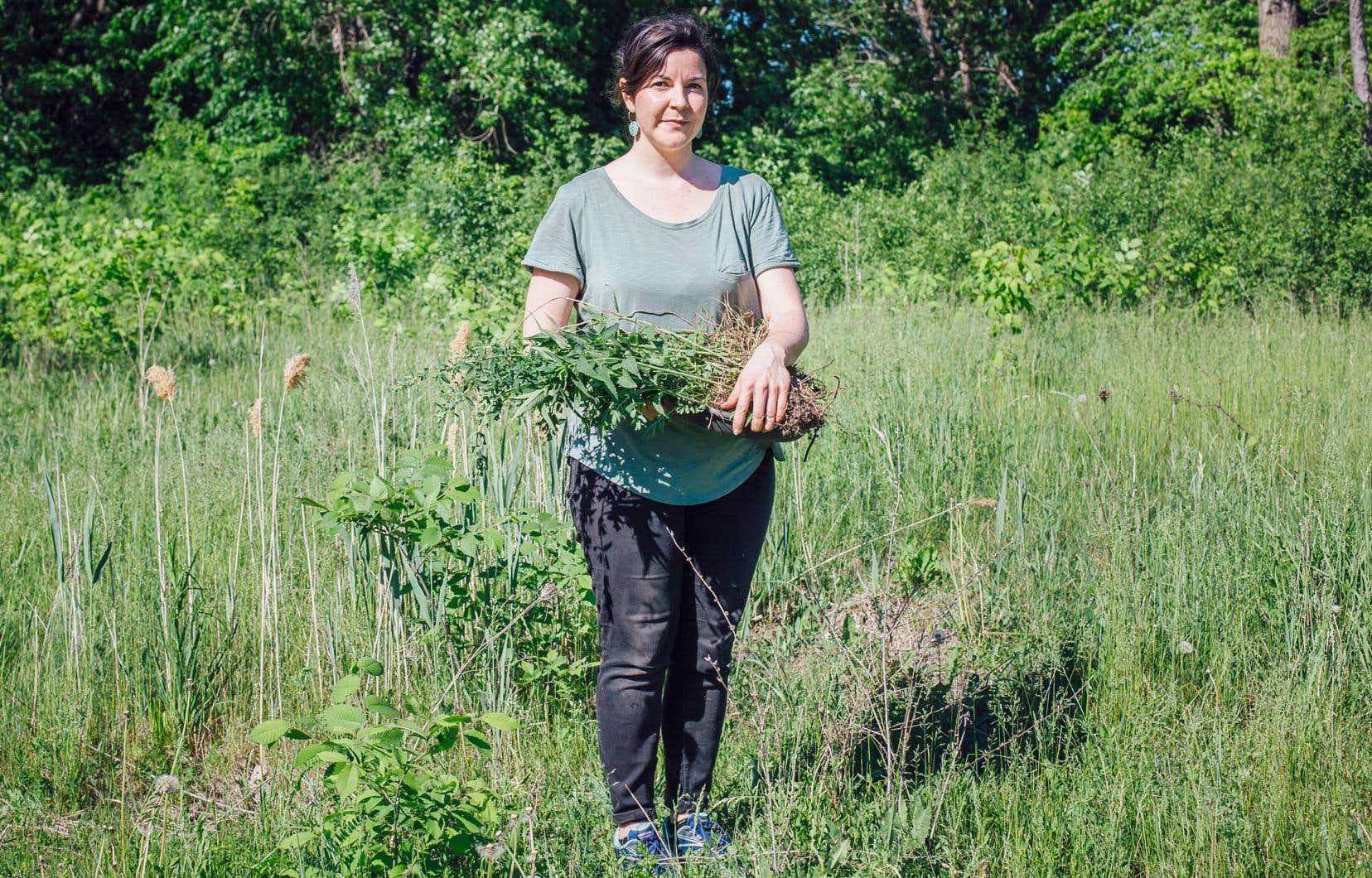 L'artiste Annie France Leclerc photographiée lors d'une performance captée en vidéo au parc du Boisé-de-Saint-Sulpice, dans le cadre de son exposition à la Galerie de l'UQAM: «Par-delà la forêt se trouve un jardin». Elle déracine des plantes sauvages telles le millepertuis et la tanaisie, puis, après avoir coupé les phragmites envahissantes, replante les autres, dans l'espoir qu'elles prennent le dessus.
