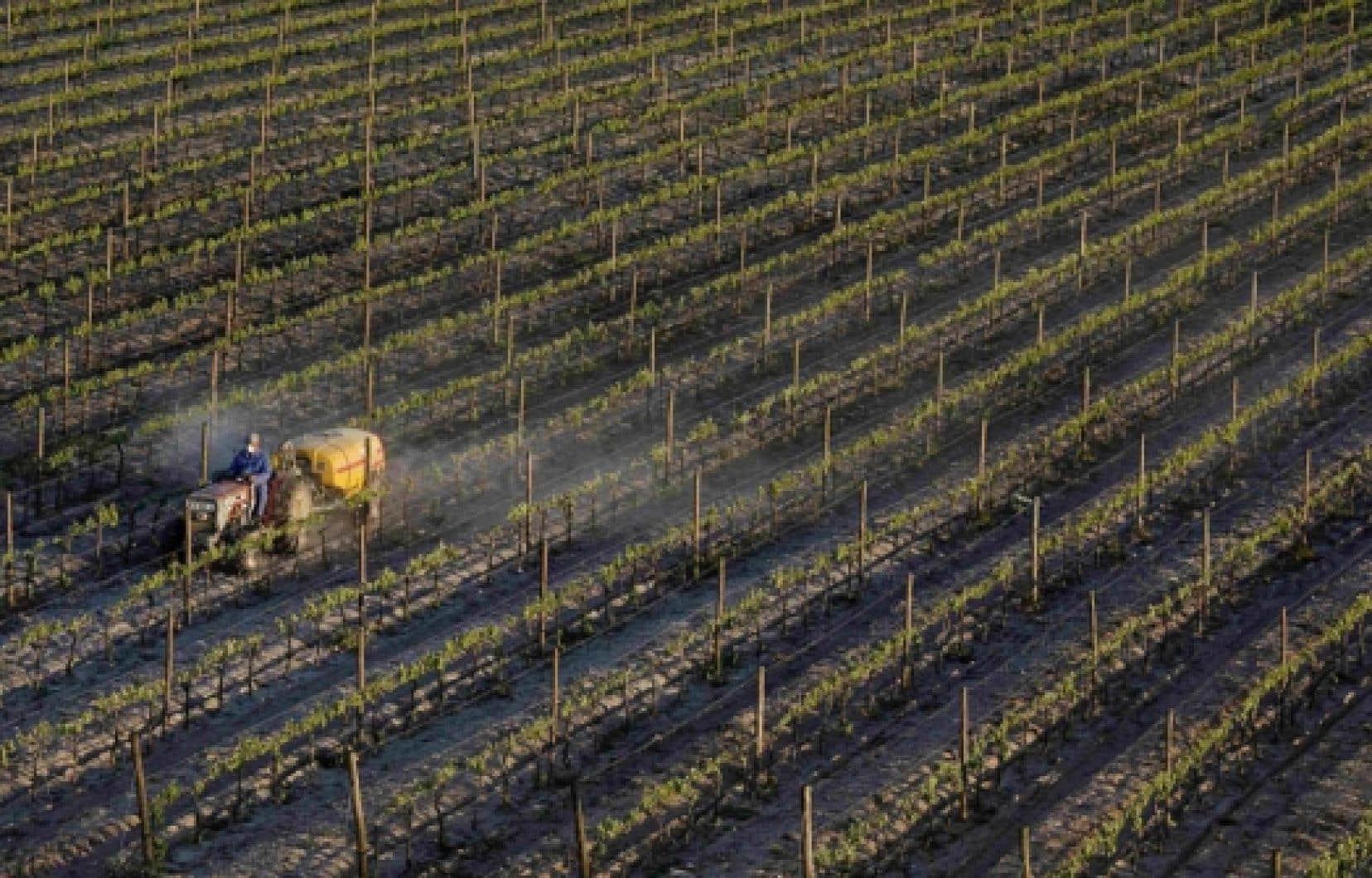 Pulv&eacute;risation de pesticides au Portugal.<br />