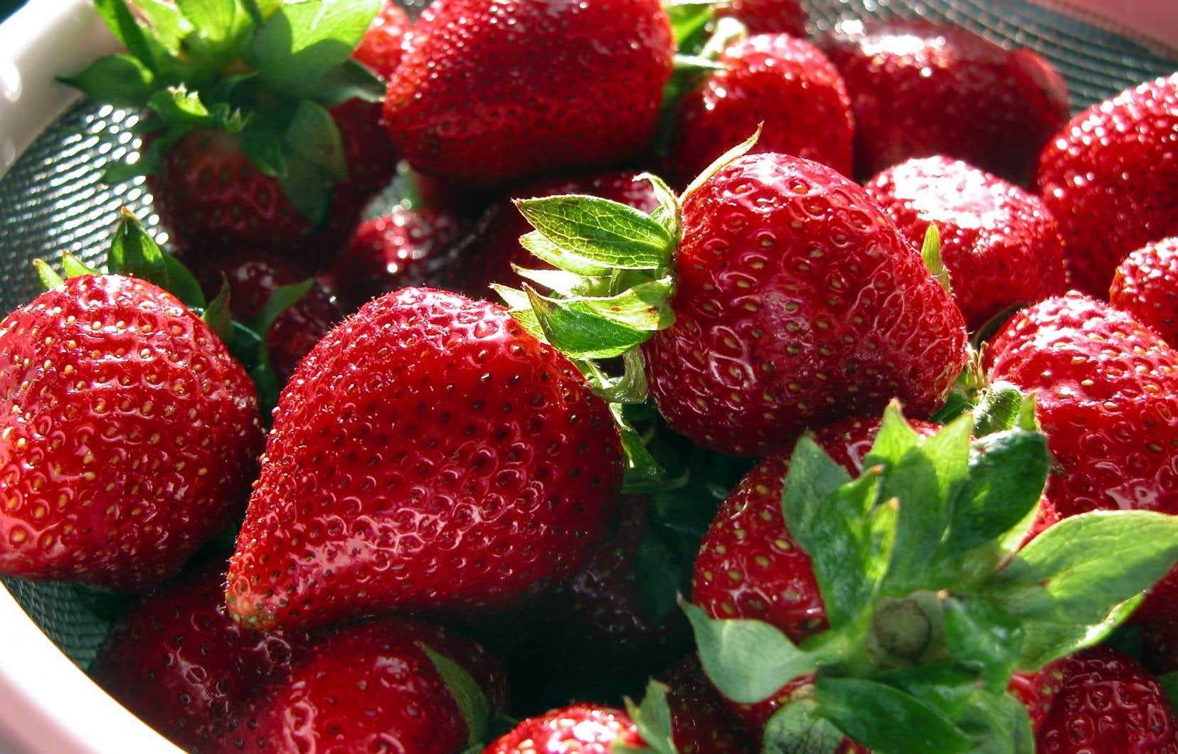 En juin, quand les fraises du Québec arrivent enfin, il n'y a qu'un mot d'ordre: se bourrer la fraise!