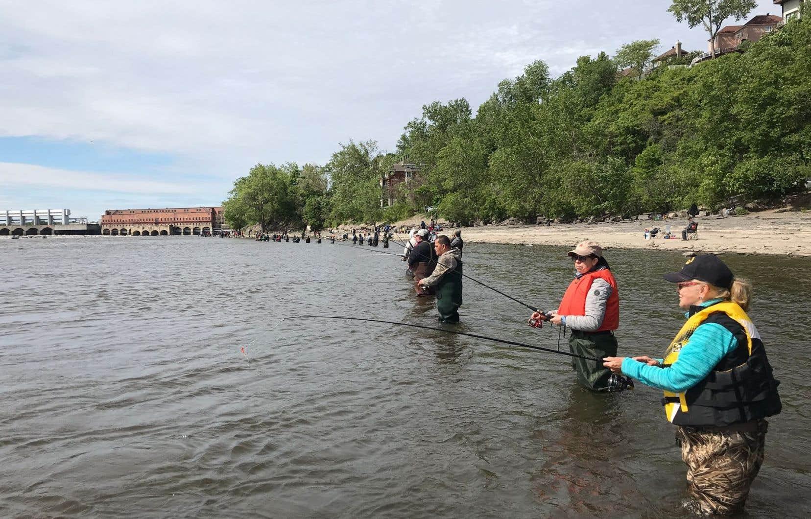 La concentration des poissons au pied du barrage hydroélectrique Pie IX est directement proportionnelle à celle des pêcheurs sur la rive.