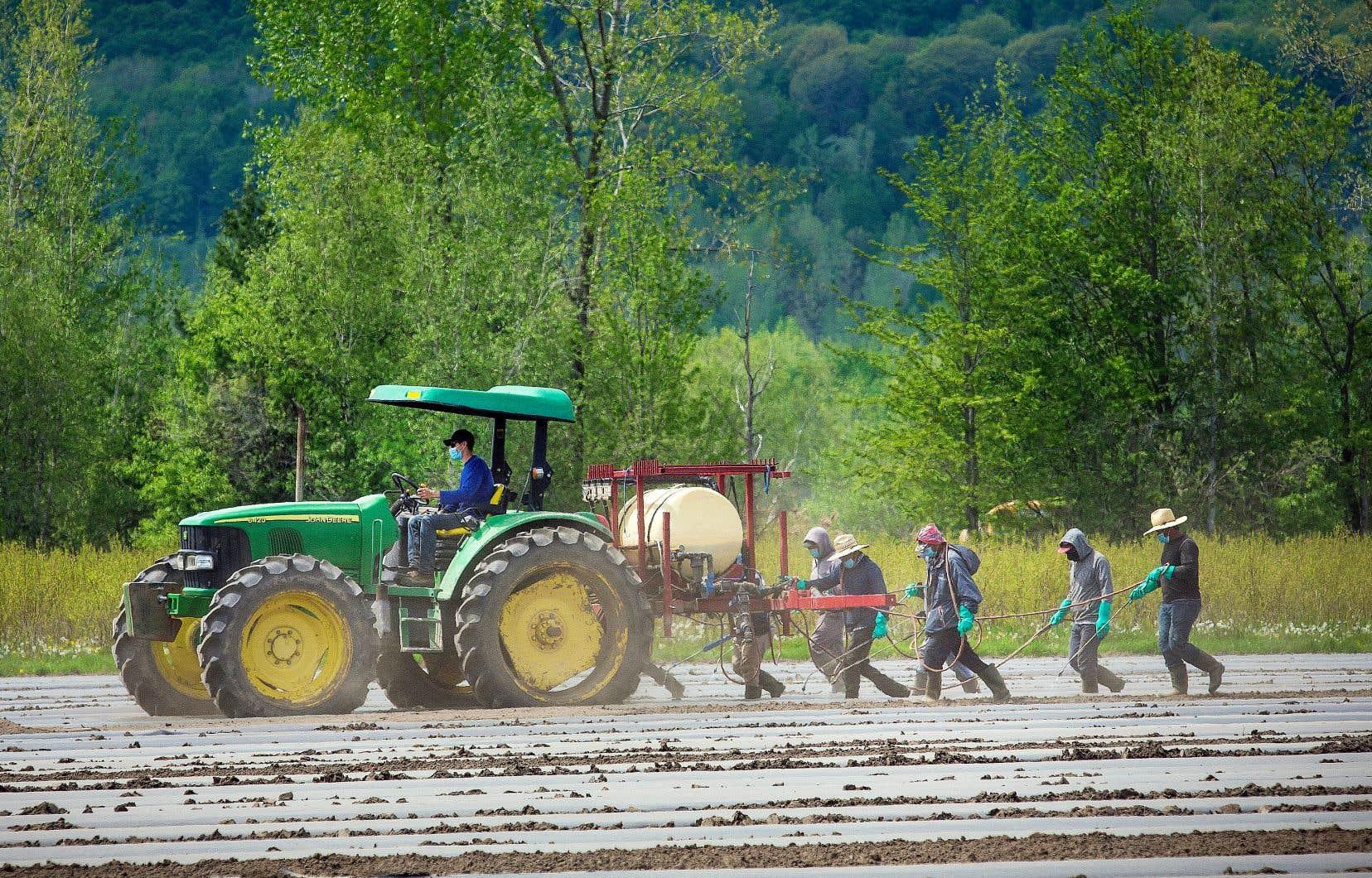 Le tiers des 675 travailleurs sondés par le Réseau d'aide aux travailleuses et travailleurs migrants agricoles du Québec ont évalué que leur logement avait des problèmes de salubrité.