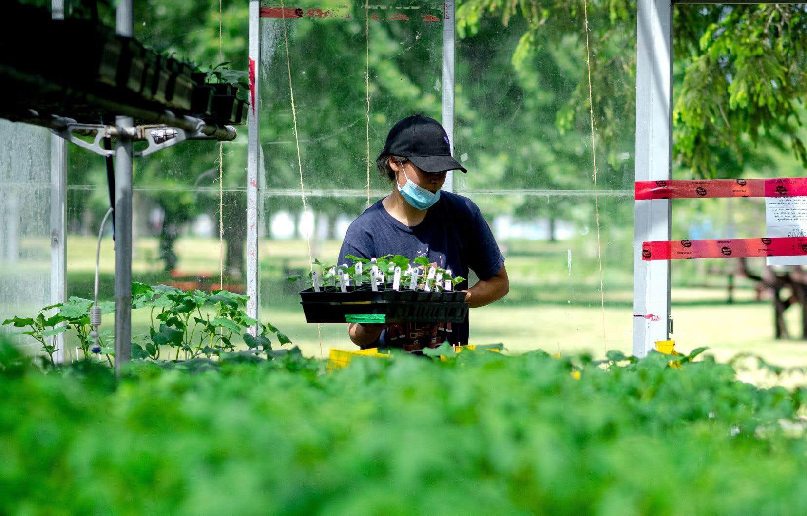 Le Grand Potager a pour mission de créer «un pôle d'échanges et de partage de savoirs en agriculture urbaine».