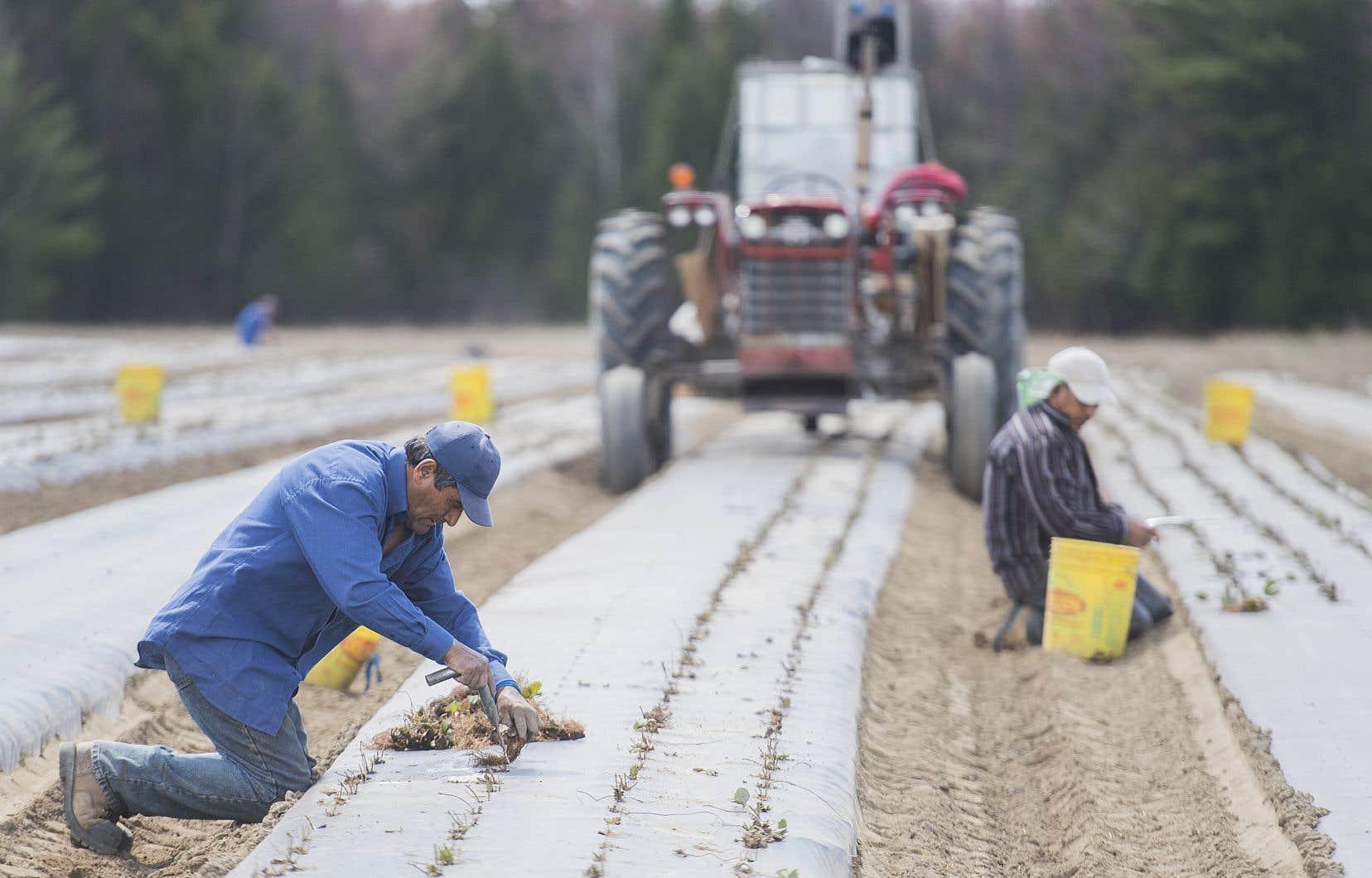 Jusqu'à 60 000 travailleurs étrangers agricoles sont embauchés à l'échelle du Canada chaque année, pour des périodes de 8 semaines à 2 ans.