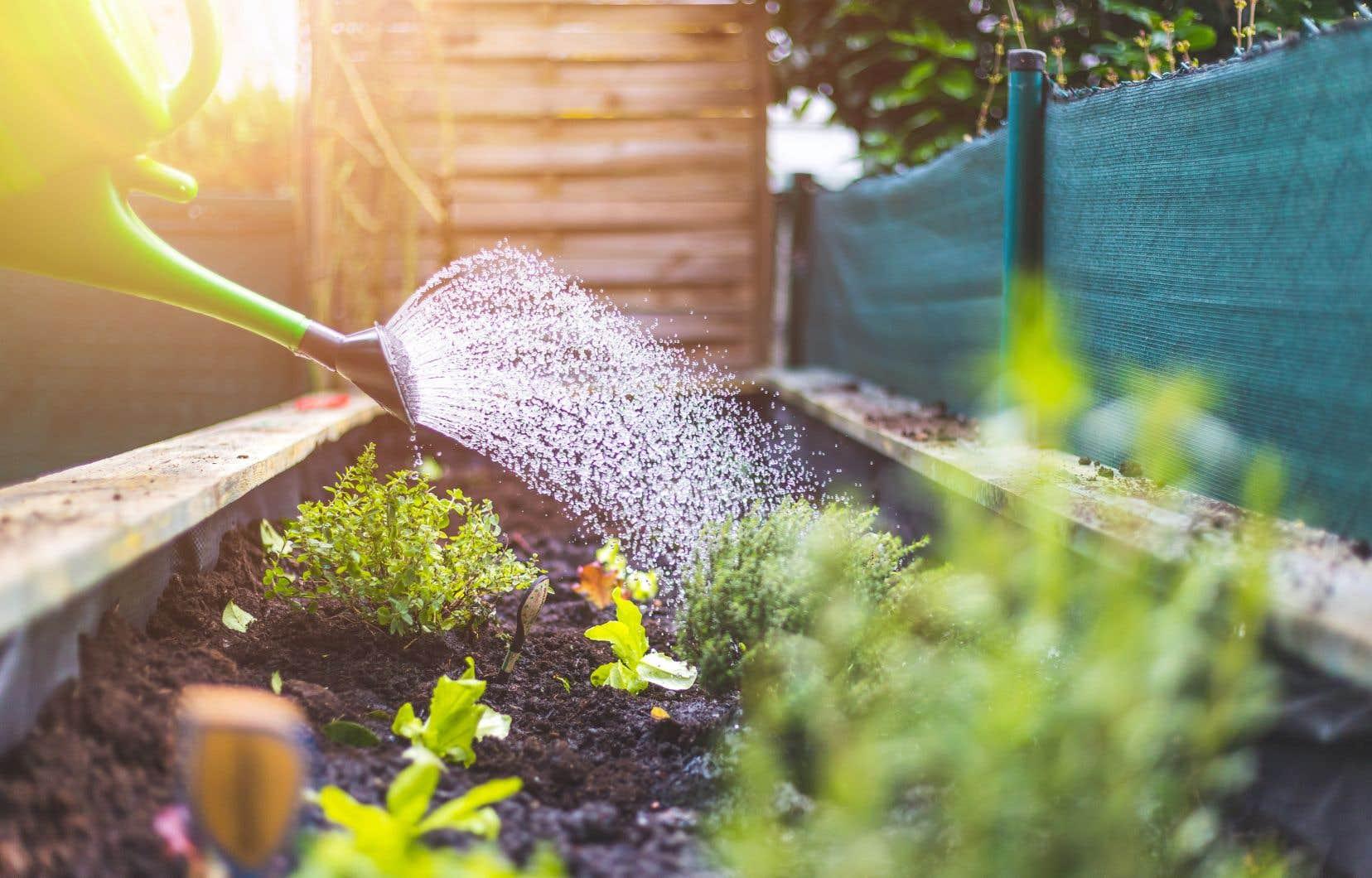 Il est toujours préférable d'offrir l'eau aux plantes avant qu'elles en aient besoin de la même façon qu'il est préférable de boire avant d'être déshydraté.