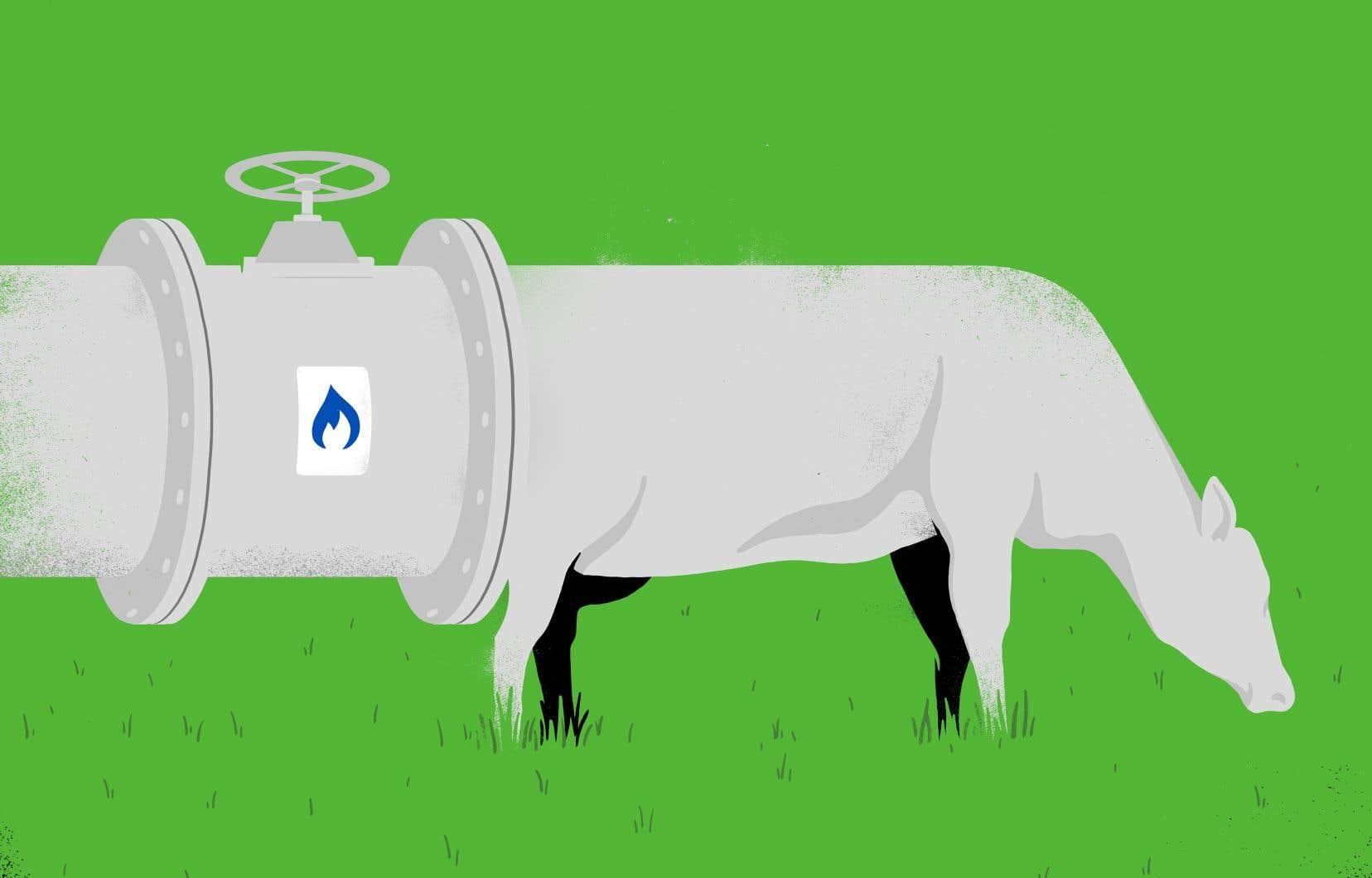 Grâce au processus de biométhanisation, il est possible de transformer le lisier et le fumier en gaz naturel renouvelable, une énergie propre qui se substitue au gaz naturel provenant des énergies fossiles.