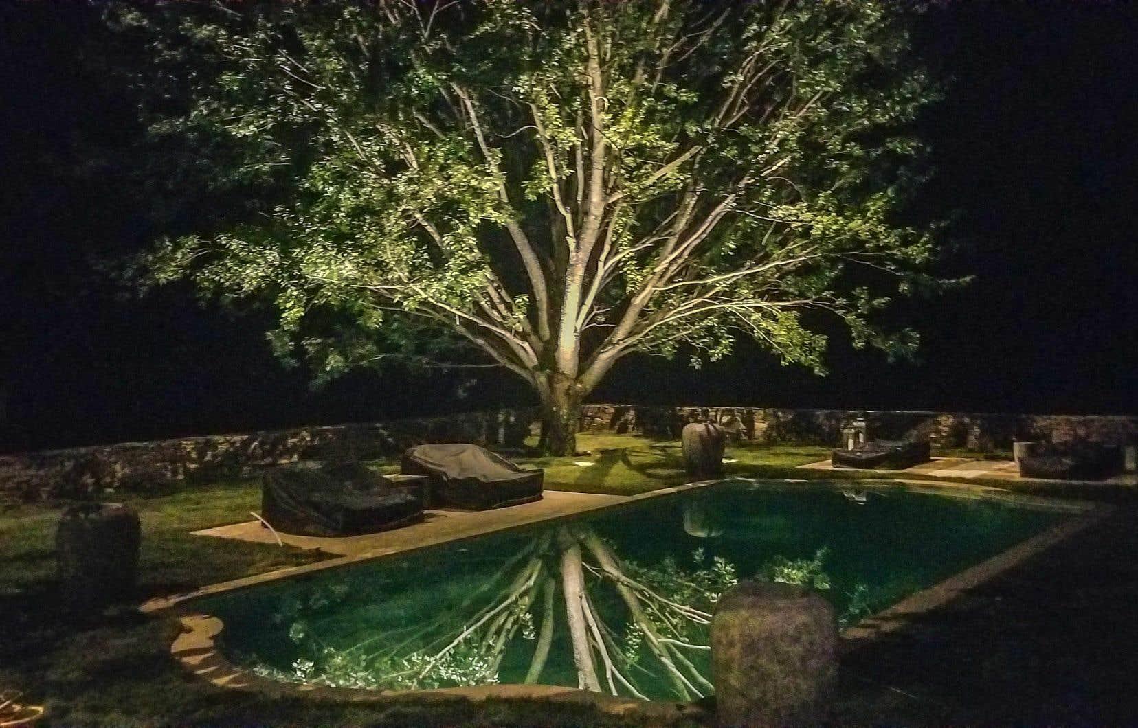 Un grand terrain rempli de végétaux, voire d'une piscine, multiplie les possibilités en matière de design et d'éclairage.