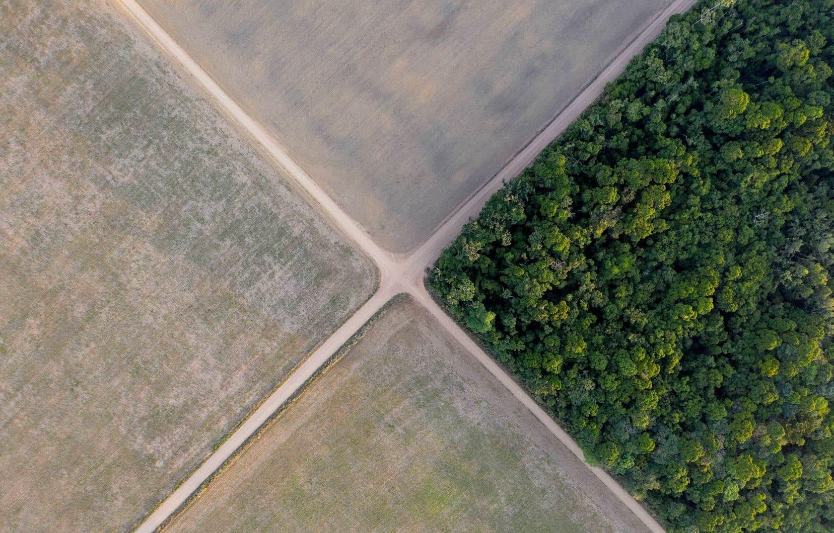 Cette situation découlerait directement du fait que cette partie du territoire a subi les pires impacts de la déforestation effectuée ces 40 dernières années, essentiellement pour faire place à l'élevage de bétail et à la culture du soya, dont on voit ici des champs à côté d'une portion encore non déboisée.