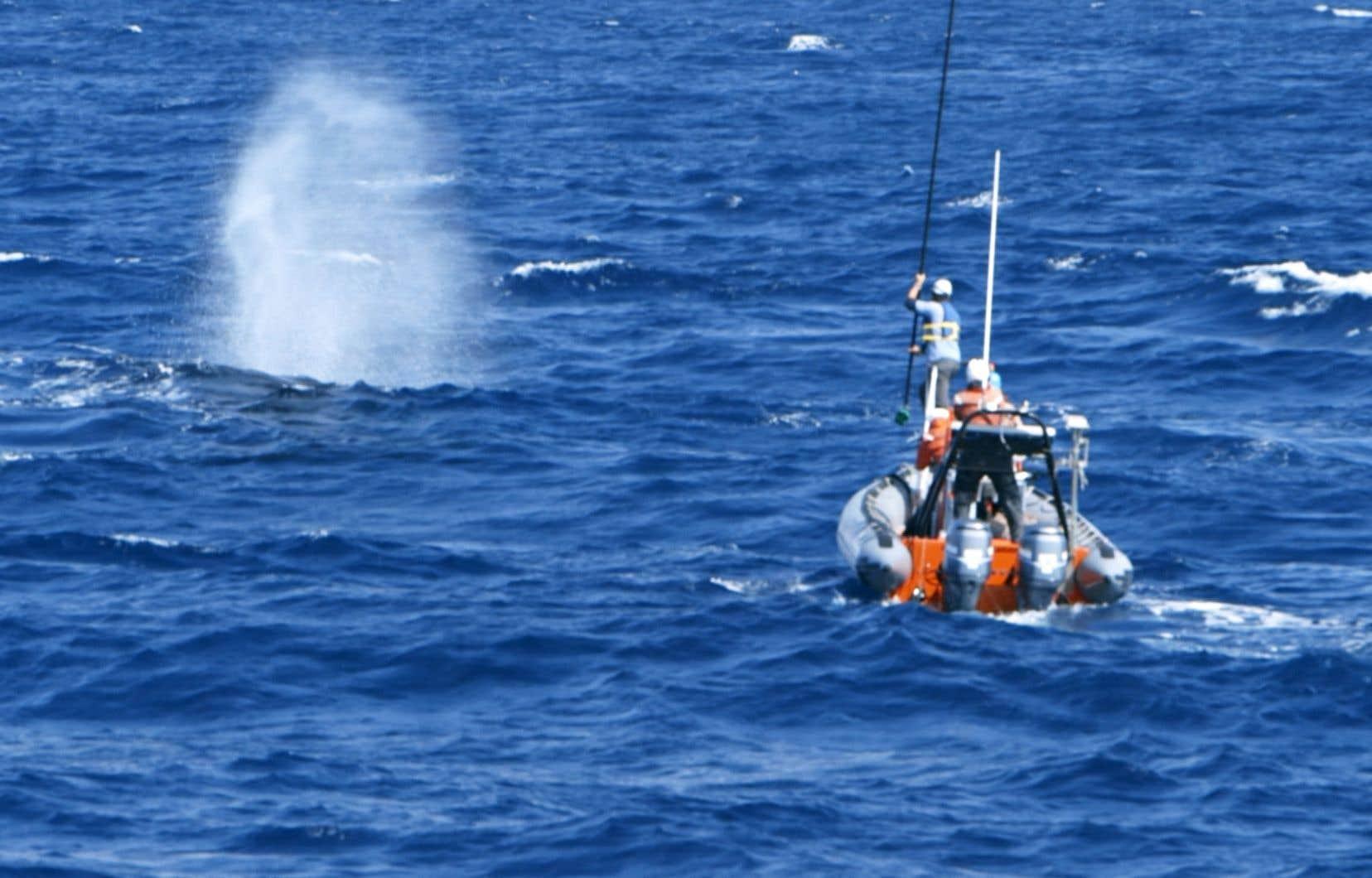 Dans le sillage de William Watkins et Mary Ann Daher, qui ont suivi les traces de la mystérieuse baleine pendant 12 ans, Joshua Zeman organise une expédition pour la localiser et, éventuellement, la voir, avec un groupe de scientifiques, au large des côtes de la Californie.