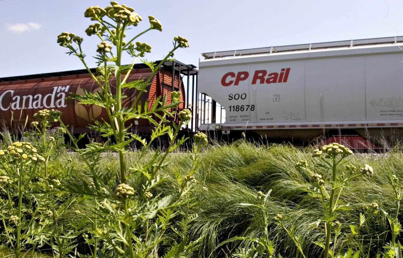 Le Canada est l'un des seuls endroits au monde où il n'y a pas de rails réservés au transport des passagers. Ici, c'est le règne du transport des marchandises.