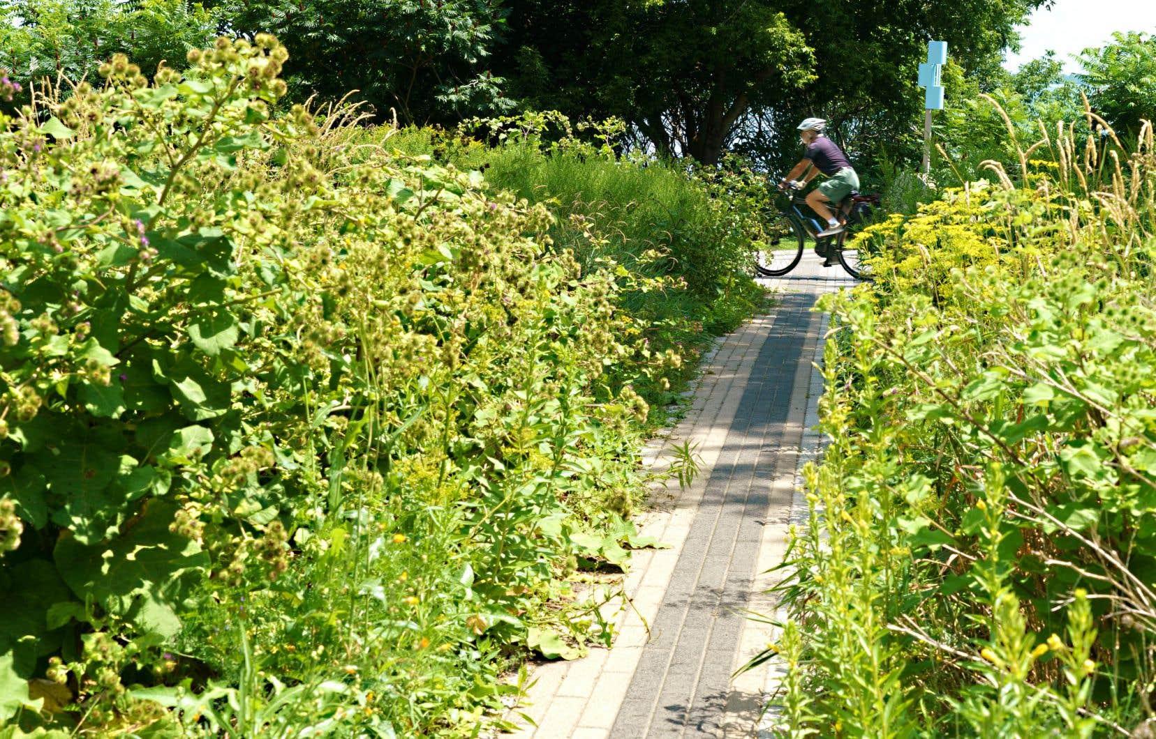 Il est toujours interdit de faire pousser des légumes, du gazon naturel ou des fleurs sauvages en avant de sa maison dans de nombreuses villes de la province. Sur la photo, un espace renaturalisé, à Montréal.