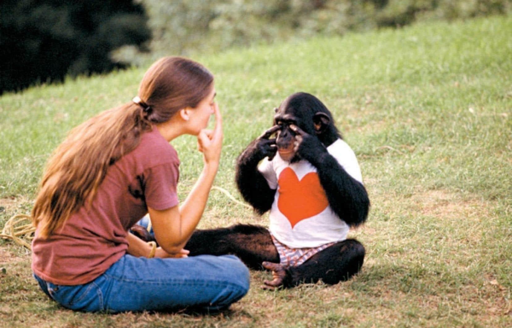 Nim est un chimpanzé élevé comme un humain et à qui on a appris le langage des signes.