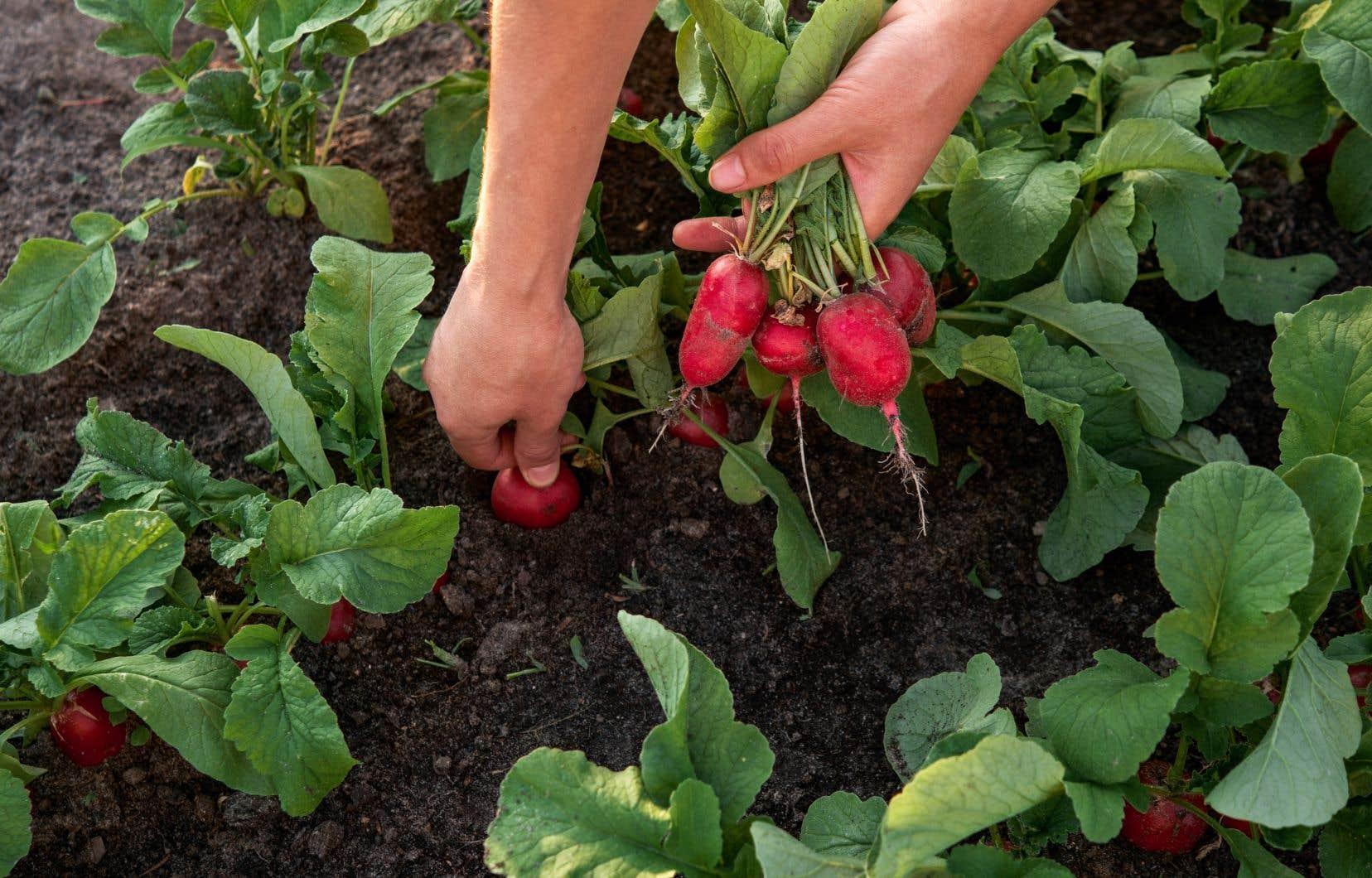 Jardiner n'est pas seulement l'acte de mettre les mains dans la terre, c'est aussi prendre des centaines de microdécisions chaque saison.