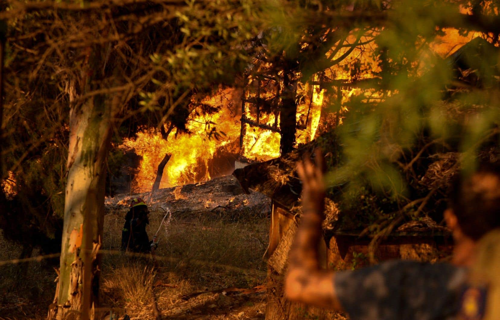 Près de 13 500 hectares ont brûlé en Grèce depuis le début de l'année, contre une moyenne de 7 500 à cette période de l'année entre 2008 et 2020.