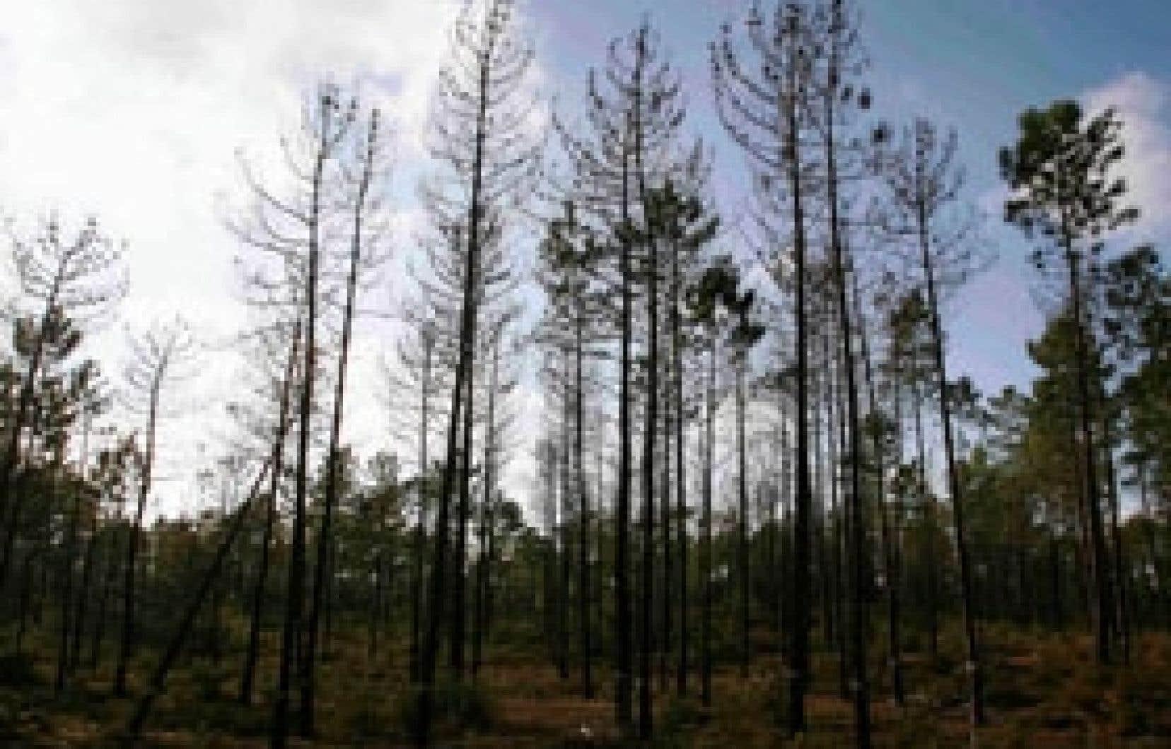 Transformer la biomasse en éthanol n'est pas rentable avec les méthodes connues à ce jour. Mais des chercheurs de l'Université de Sherbrooke ont trouvé un moyen de rendre la chose rentable.
