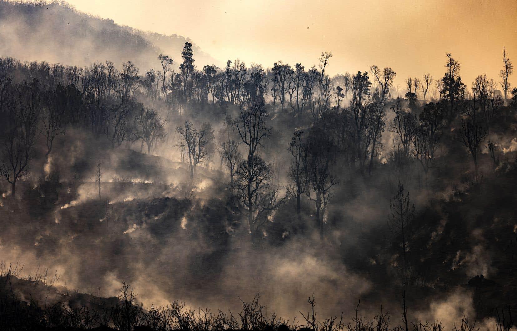 Quelque 725 hectares d'une forêt près de la ville touristique de Chefchaouen ont déjà été engloutis par les feux déclarés samedi.