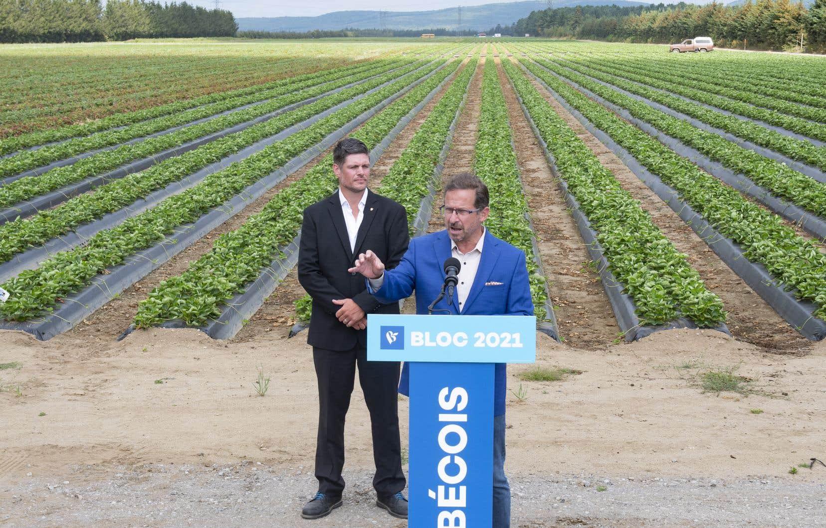 Dans un champ de fraises à Pont-Rouge, le chef Yves-François Blanchet a dénoncé une fois de plus la tentative de Santé Canada d'augmenter la limite de résidus de pesticides permise sur certains aliments.