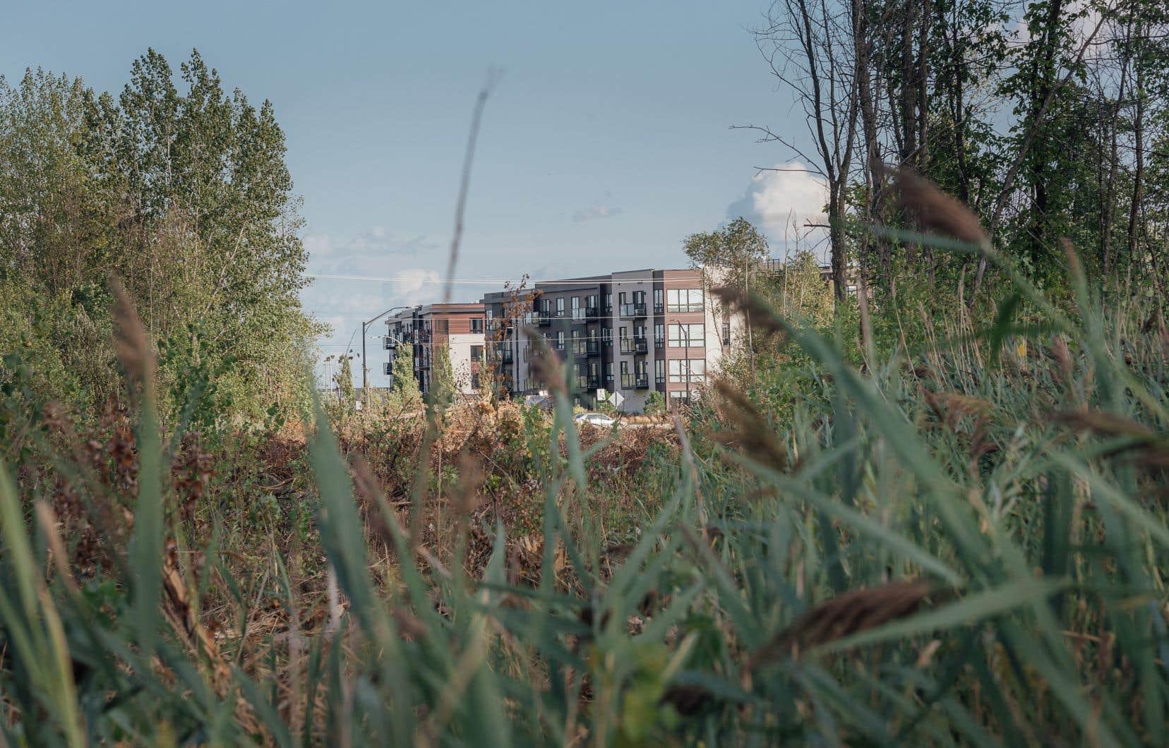 Le prolongement du boulevard Béliveau, à Longueuil, sera fait directement dans un secteur qui abrite une population de rainette faux-grillon, une espèce désignée comme «menacée» en vertu de la Loi sur les espèces en péril du Canada.