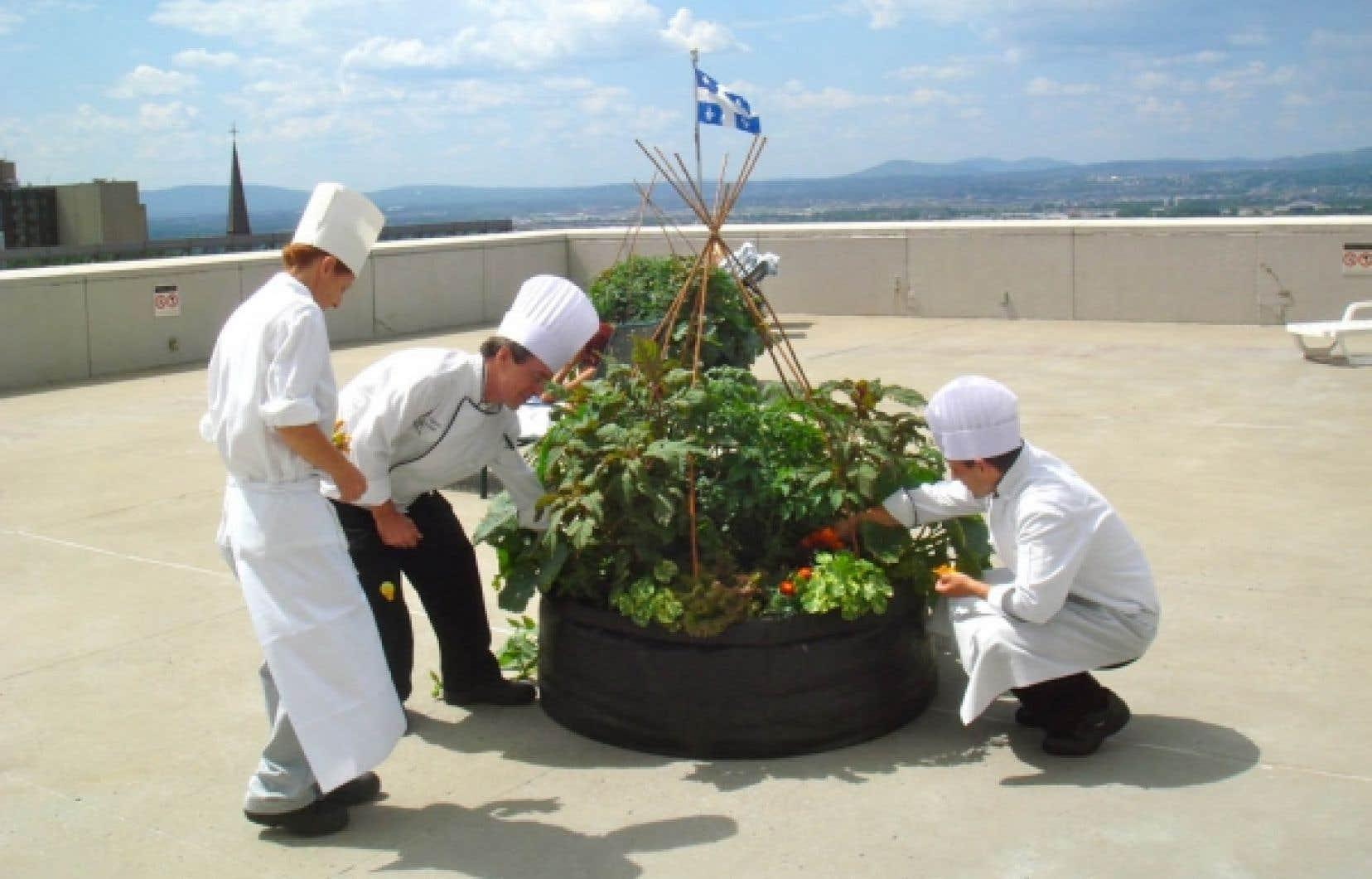 Sur le toit de l'hôtel Hilton, on récolte des fleurs, des fines herbes et des légumes pour les cuisines et les employés.<br />
