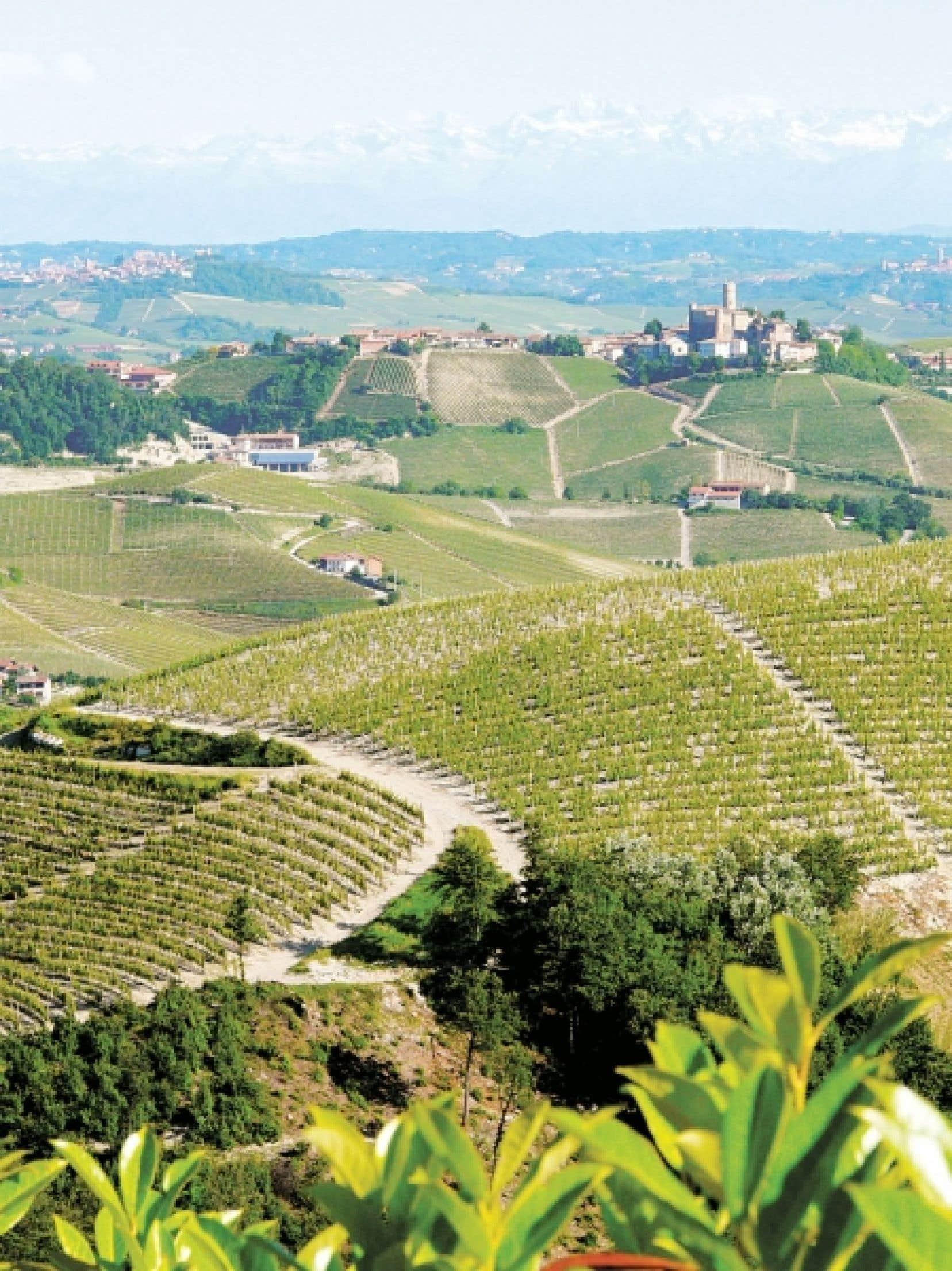 Un vignoble piémontais