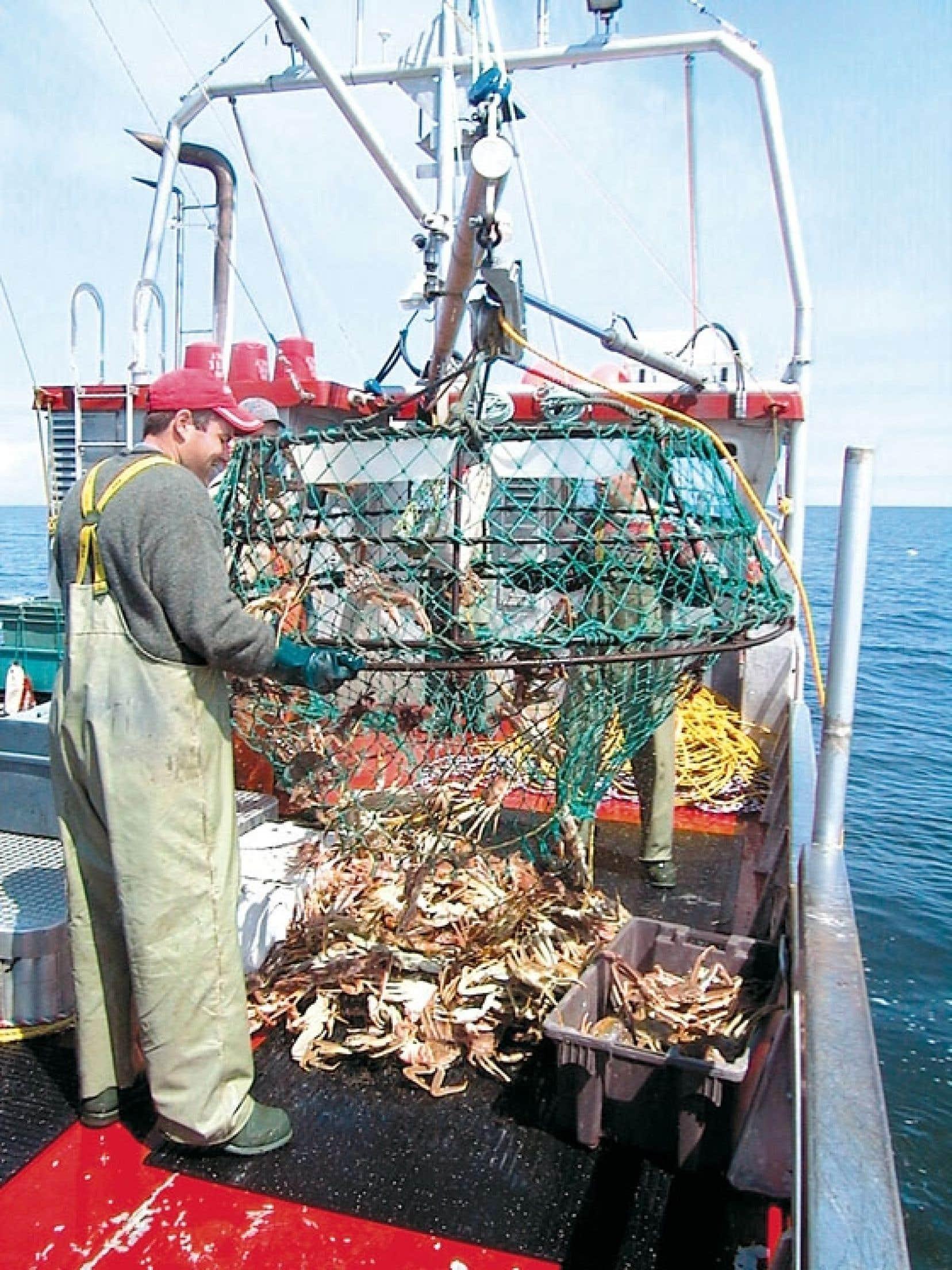 Au Québec, le crabe des neiges (une espèce non menacée) est pêché du début d'avril jusqu'à la fin de mai.