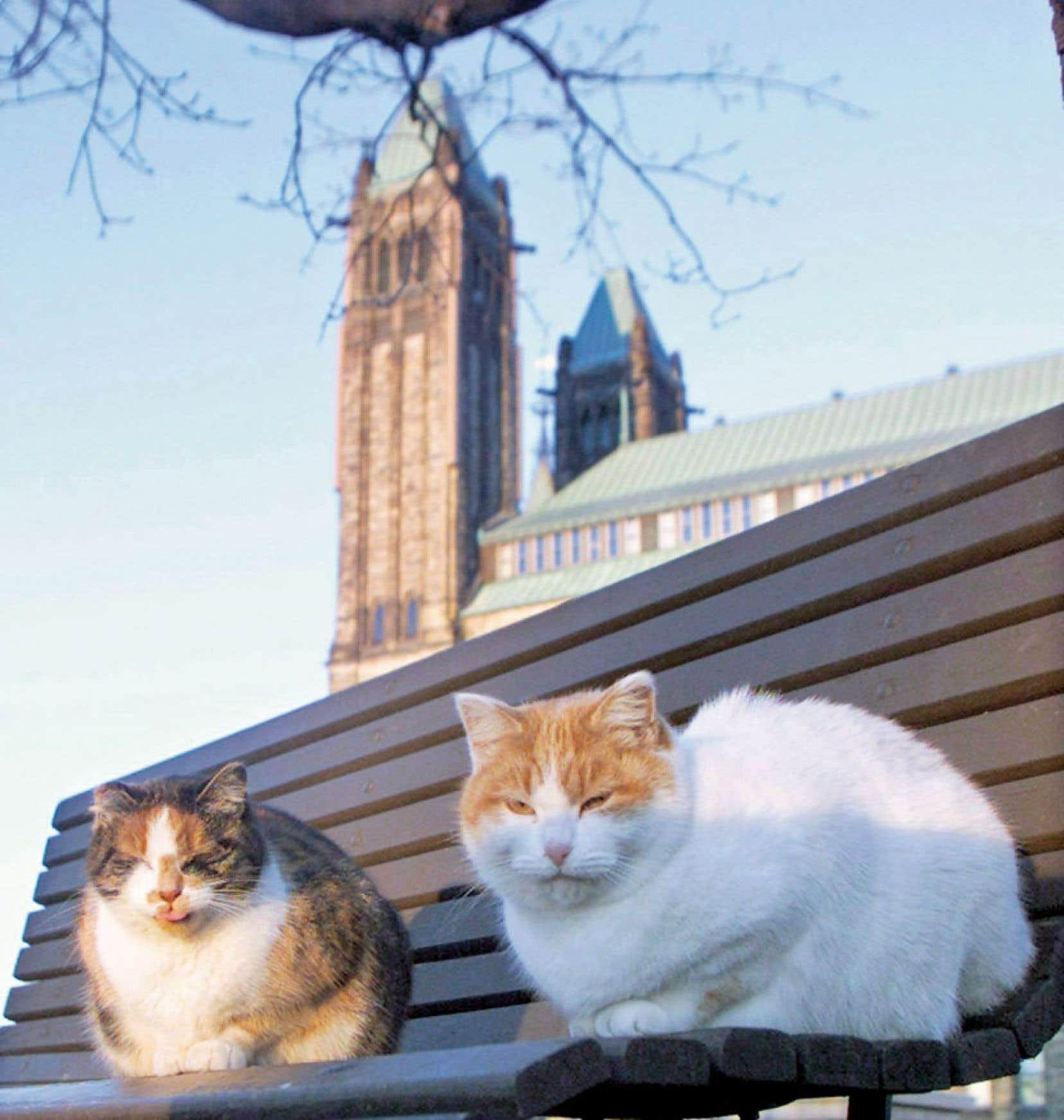 En 2004, le refuge a stérilisé tous les chats, et la population a décliné petit à petit. En 2012, il ne restait plus que six chats, qui ont été répartis dans des foyers.