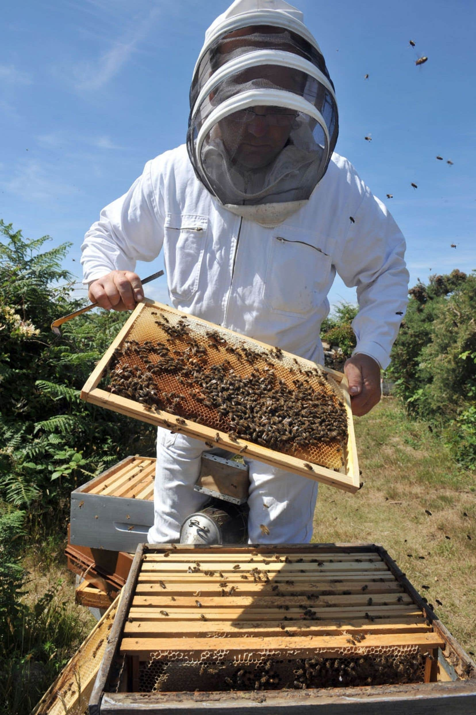 Le taux de mortalité des abeilles est d'environ 30% chaque année depuis 2007 en Europe.