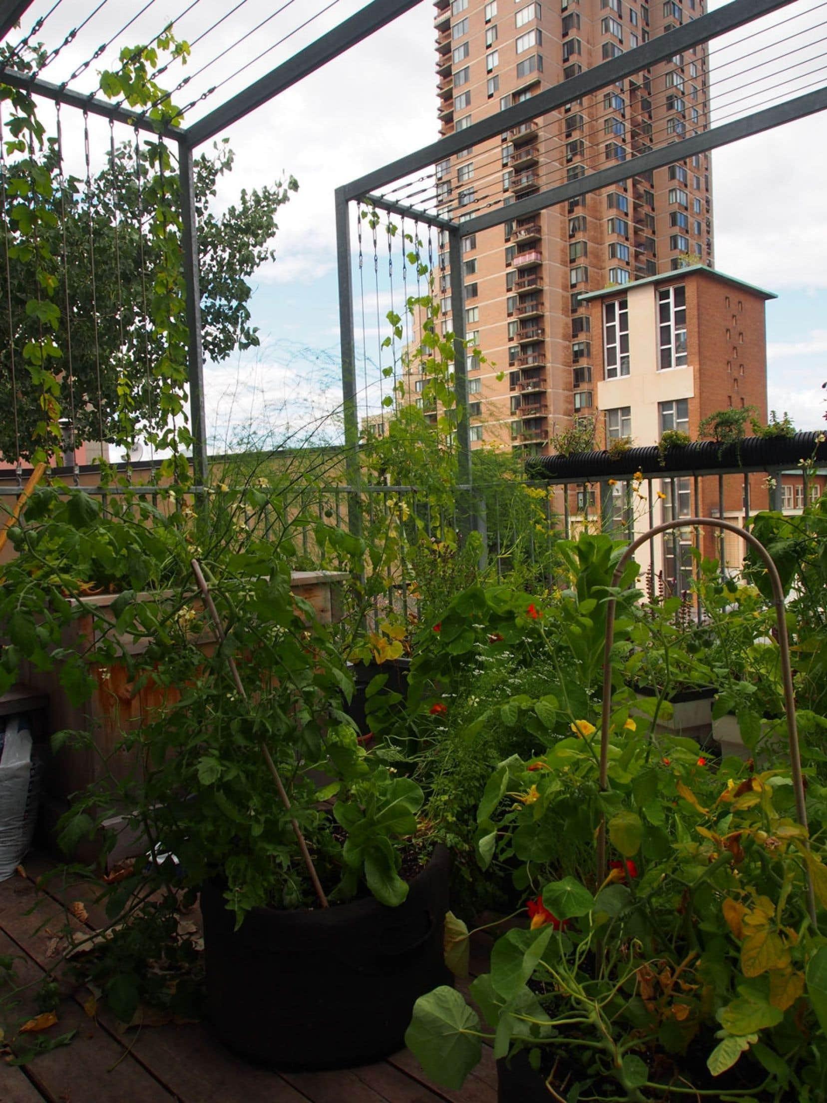 Un jardin potager sur le toit du centre d'écologie urbaine de Montréal