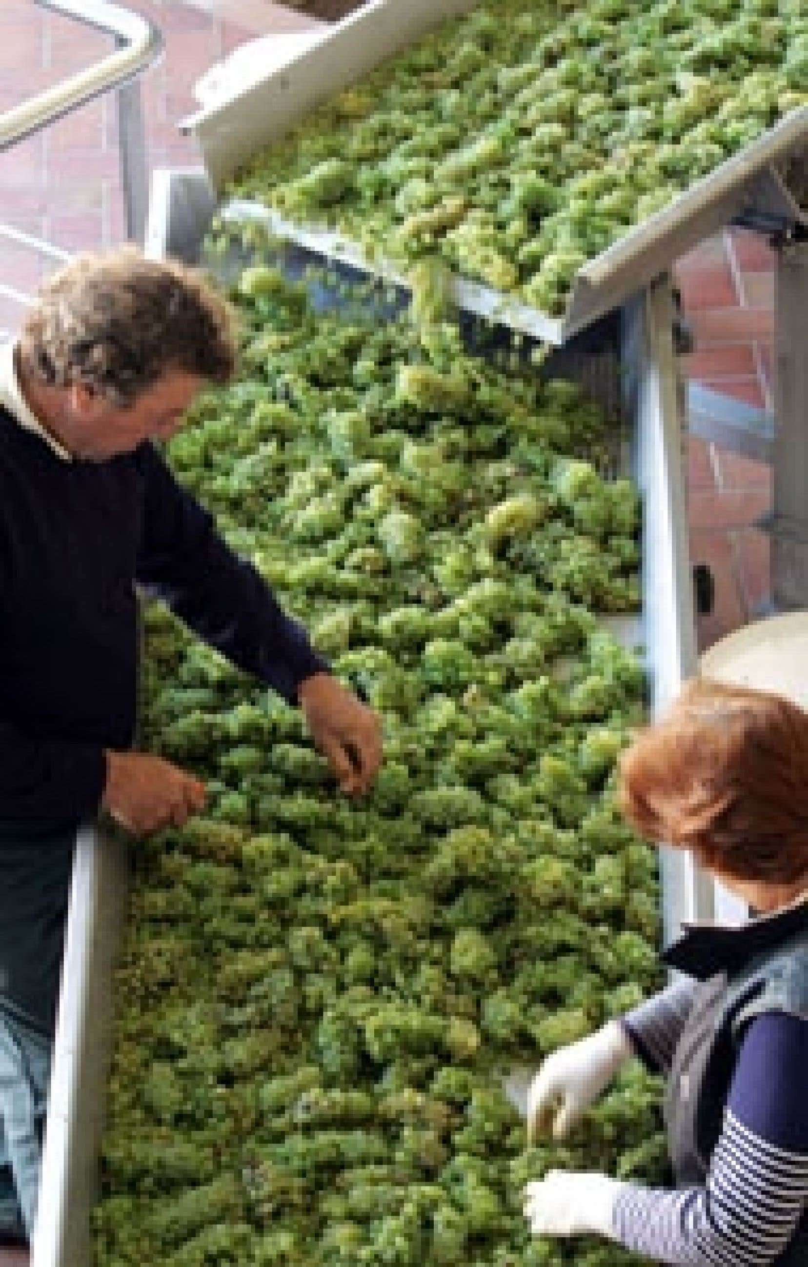 Après les pâtes et papiers, Kruger touchera désormais au monde du vin.