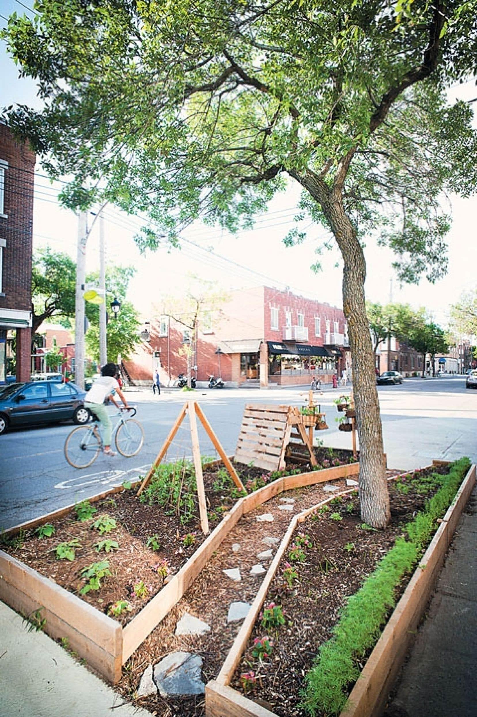 L'aménagement des potagers mange-trottoir au coin des rues de Villeray a mobilisé les citoyens du quartier. Le projet-pilote est bien accueilli: une garderie s'occupera d'une des parcelles et l'administration municipale s'y est également intéressée.